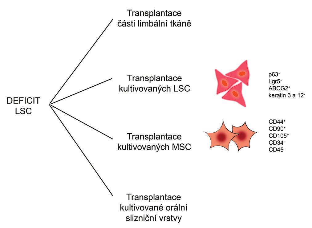 Možné terapeutické přístupy při léčbě deficitu LSC. Při léčbě deficitu LSC mohou být transplantovány části limbální tkáně nebo laboratorně kultivované LSC, MSC či orální slizniční vrstva