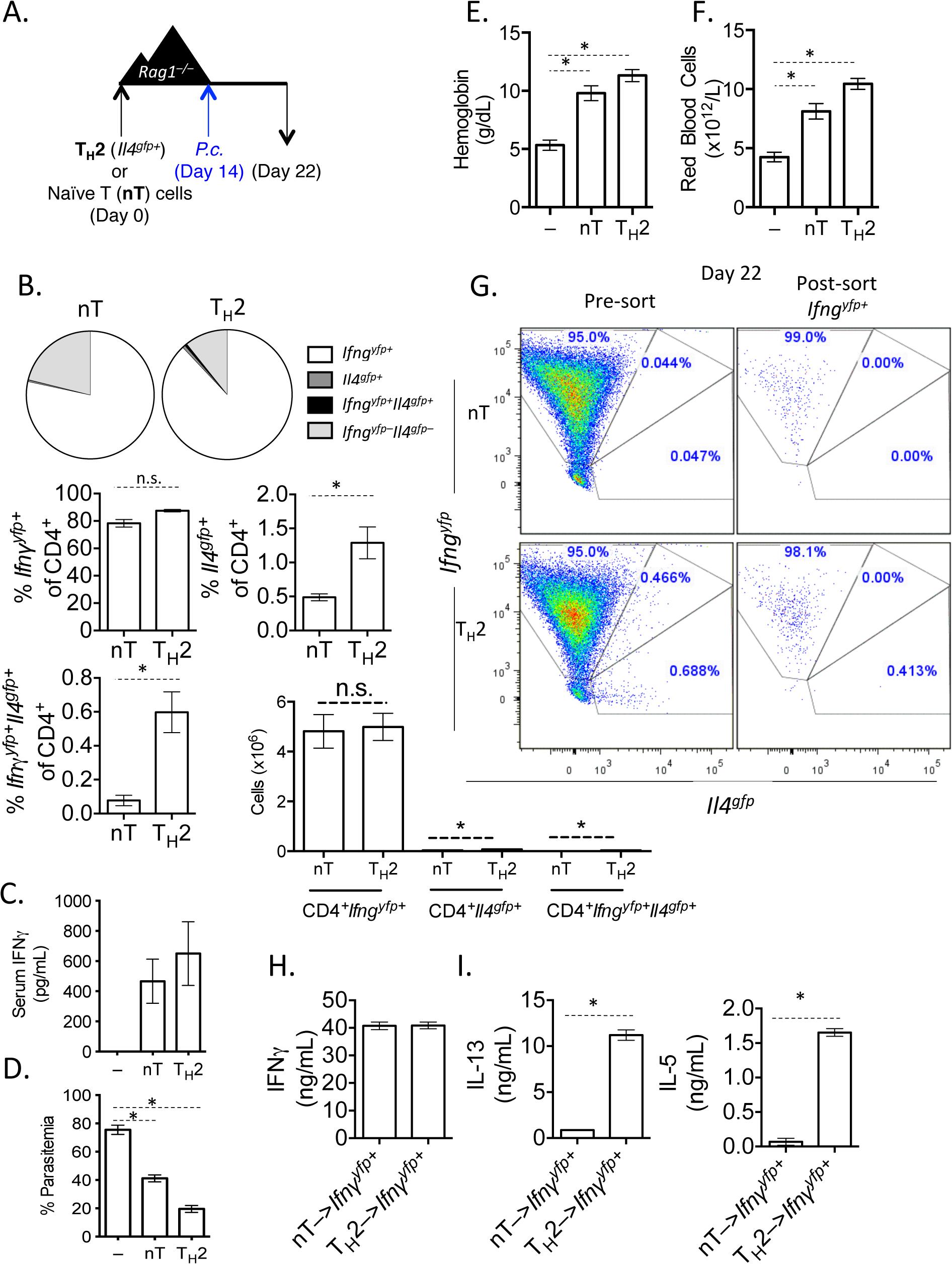 <i>In vitro</i> Th2 cells produce IFNγ and protect <i>Rag1</i><sup><i>–/–</i></sup>mice during <i>Plasmodium</i> infection.