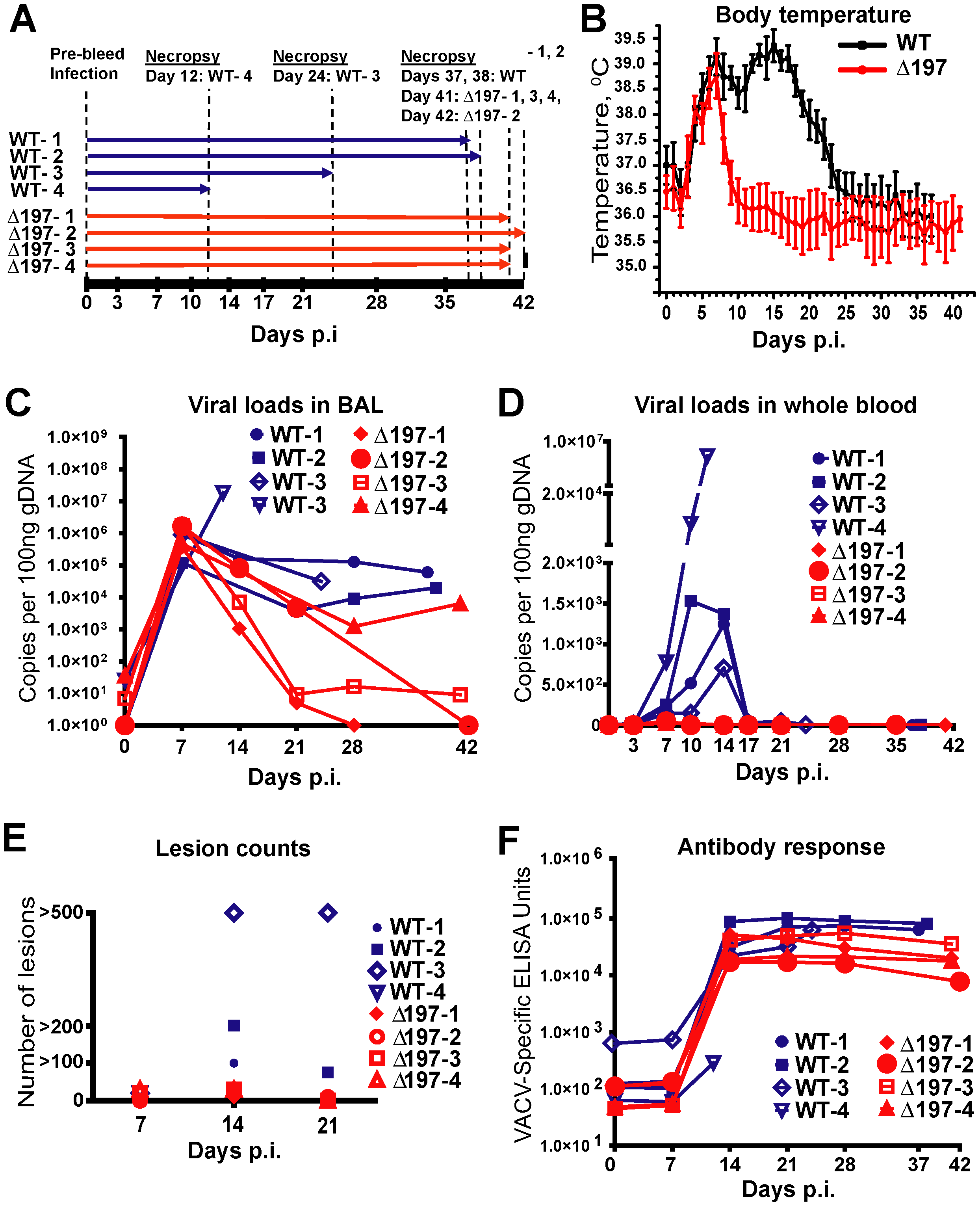 MPXVΔ197 is attenuated <i>in vivo</i>.