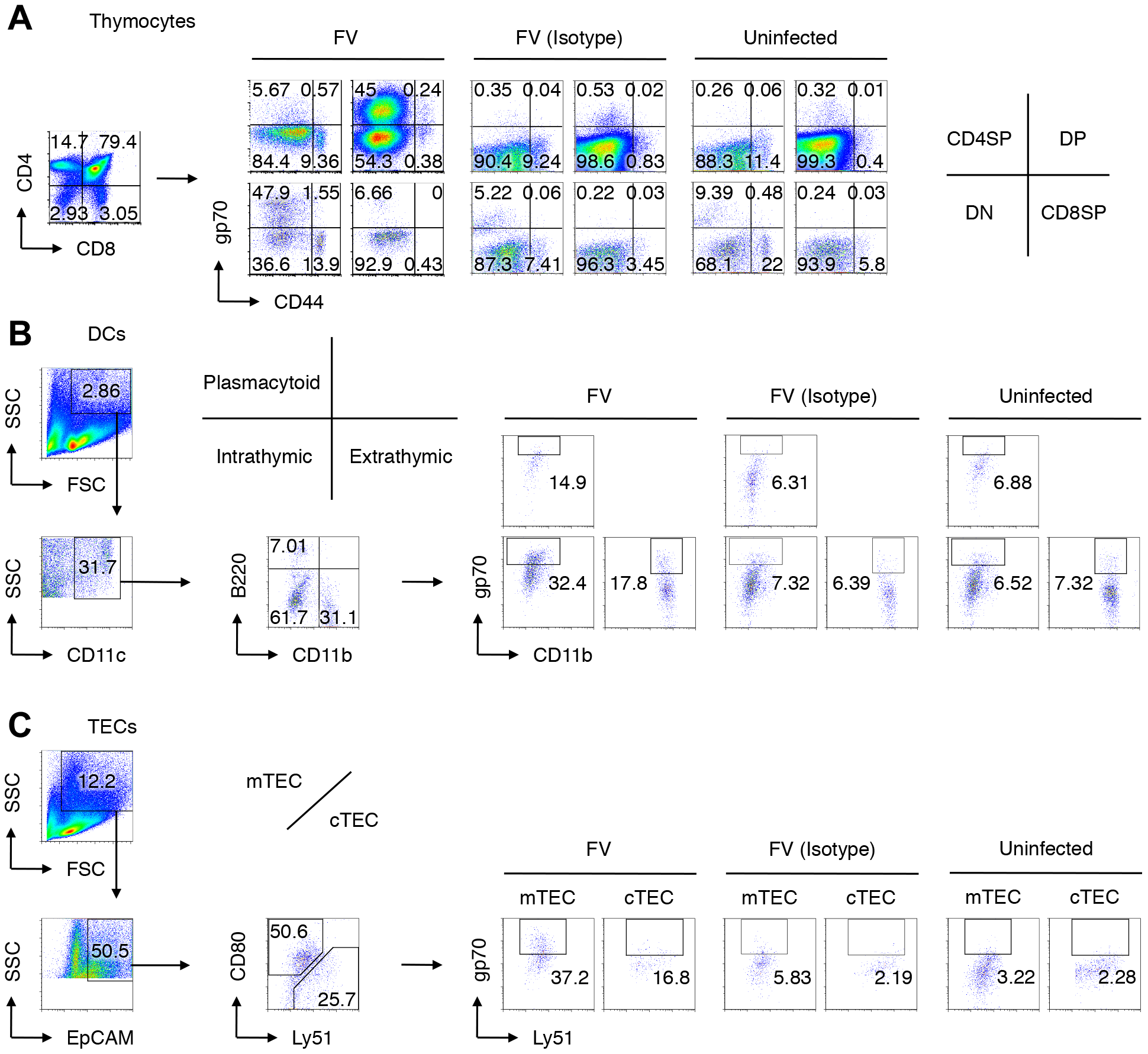 Viral antigen expression in each cell population in the thymus after FV infection.