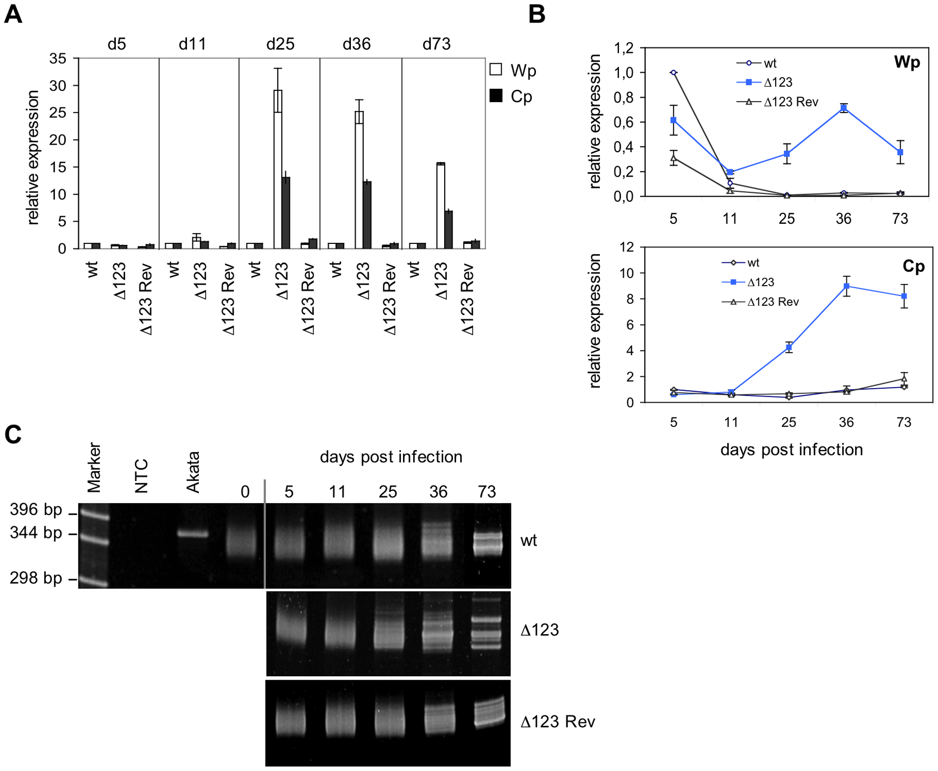 Latent promoter usage and clonality studies of transformed B cells.