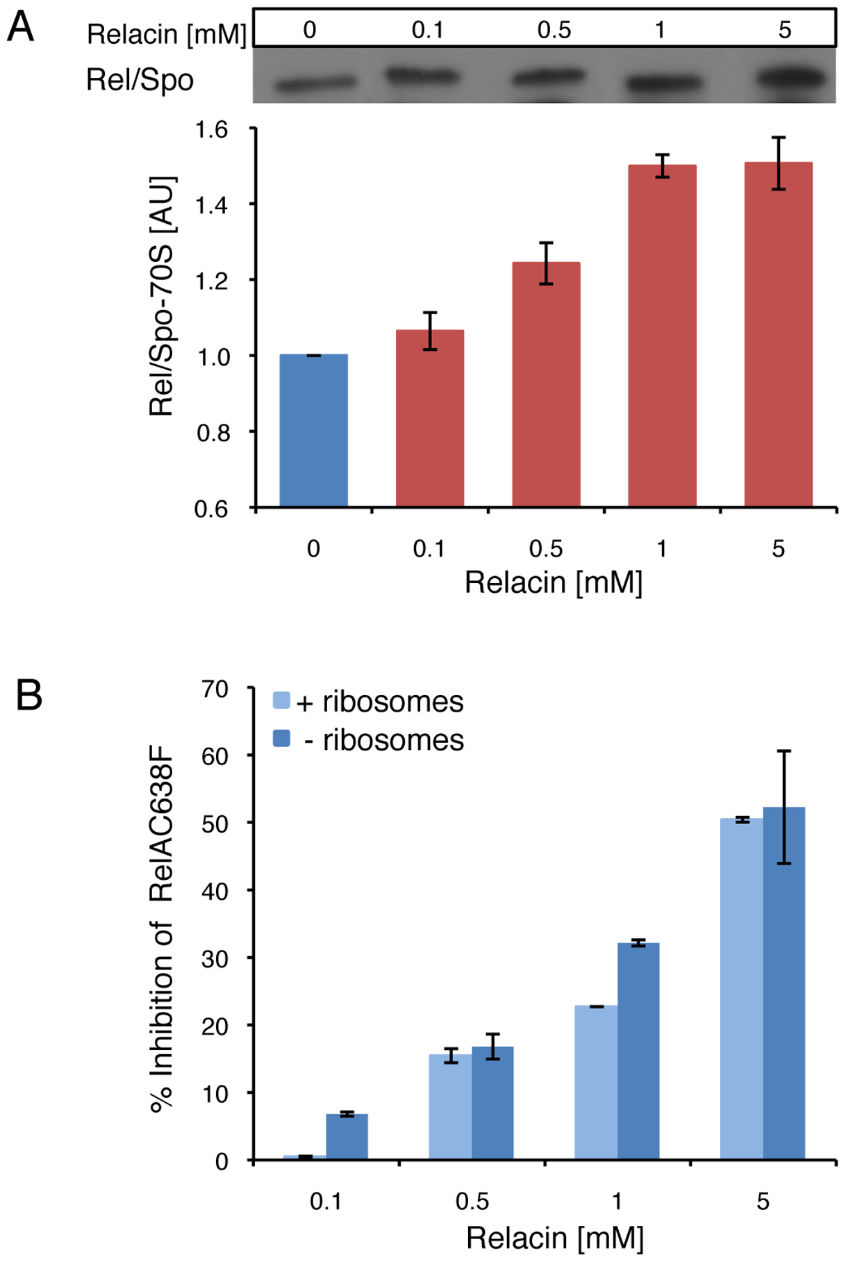 The effect of Relacin on Rel-ribosomes interaction.