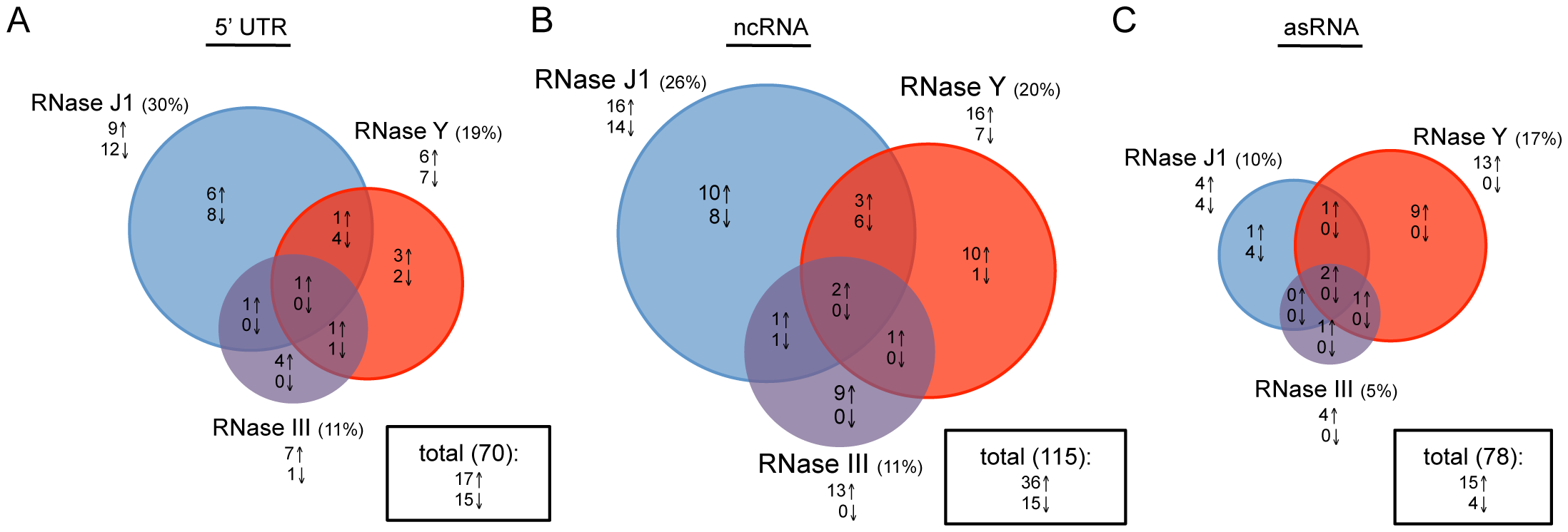 Effects of RNase J1, Y, and III depletion on abundance of <i>B. subtilis</i> regulatory RNAs.