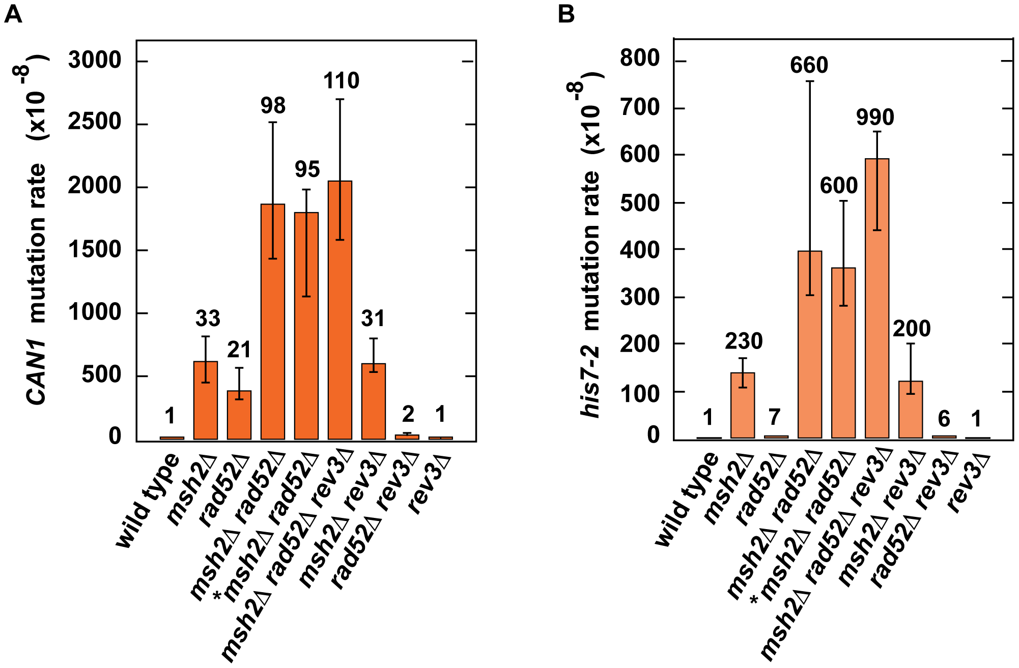 Effect of combining <i>msh2</i>Δ with <i>rad52</i>Δ on spontaneous mutagenesis.