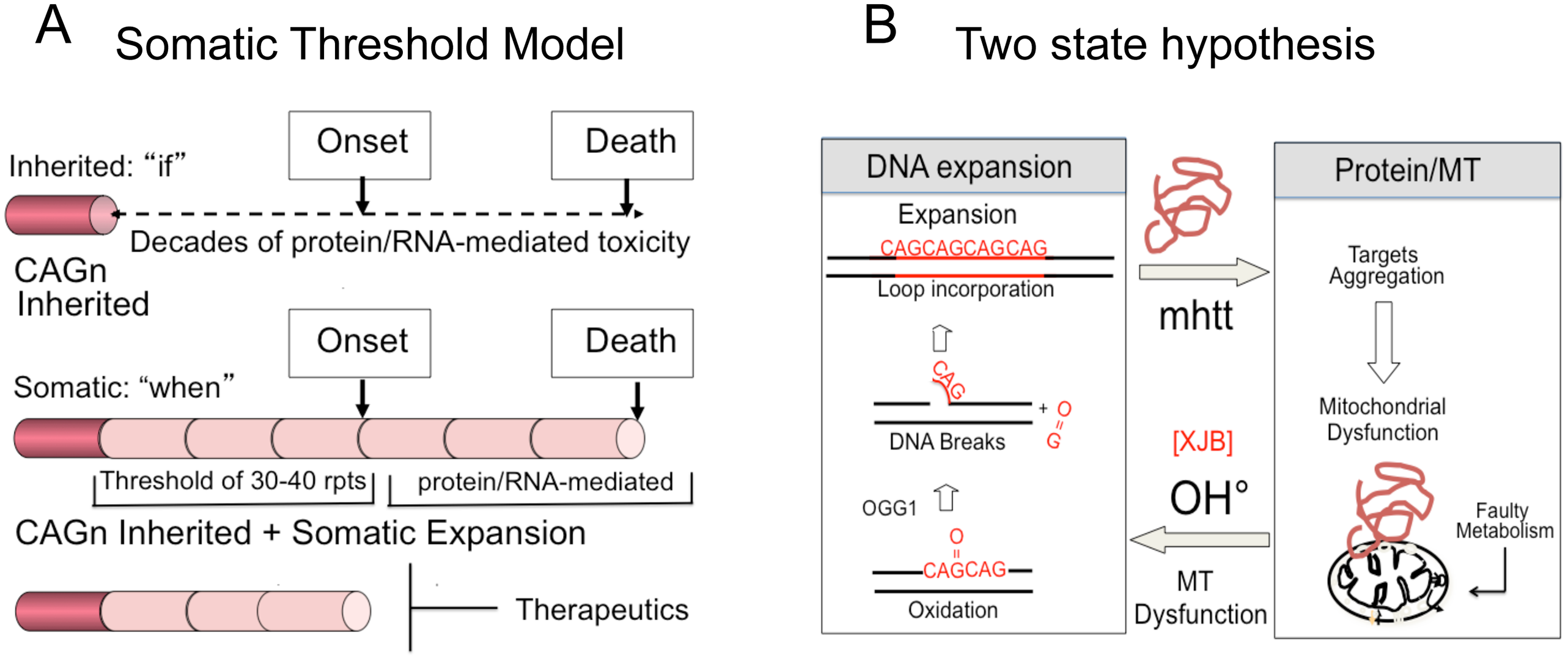 Model for somatic expansion and the age of disease onset.