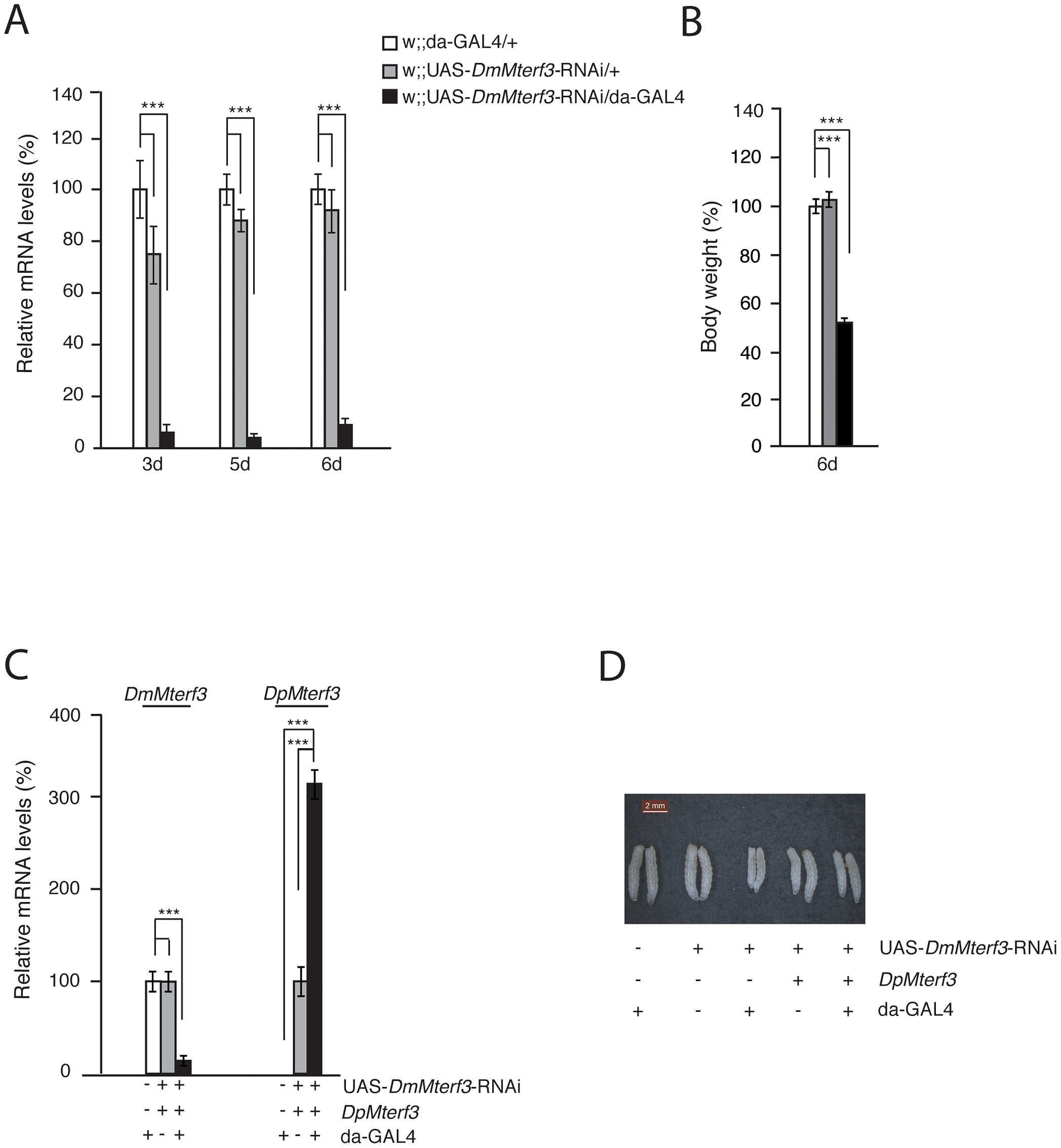 Phenotype and molecular characterization of <i>DmMterf3</i> knockdown larvae.