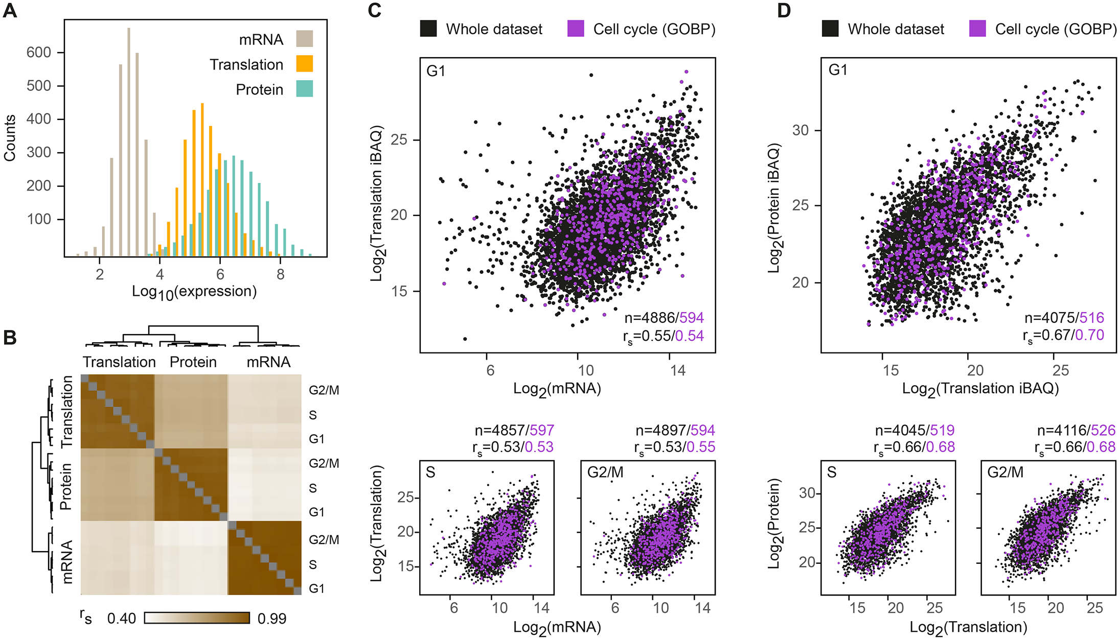 Widespread post-transcriptional control across the cell cycle.