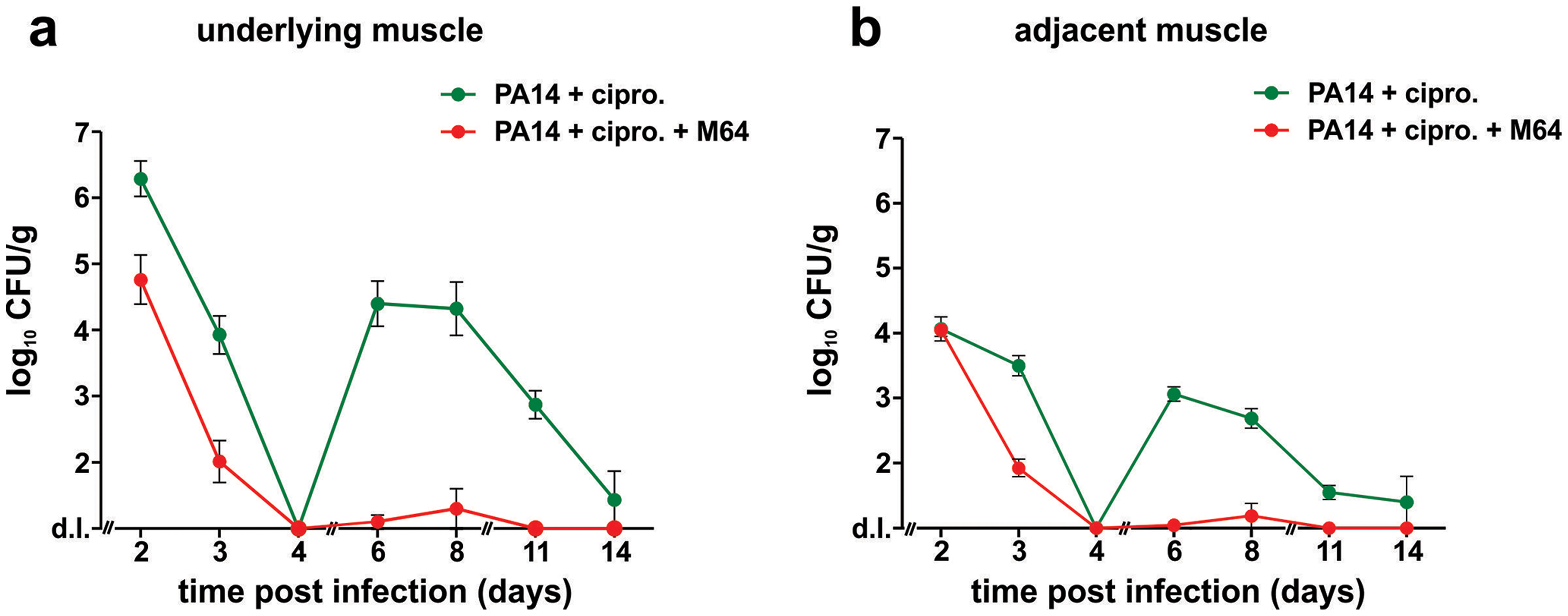 M64 inhibits <i>P. aeruginosa</i> persistence in the mouse burn and infection models.