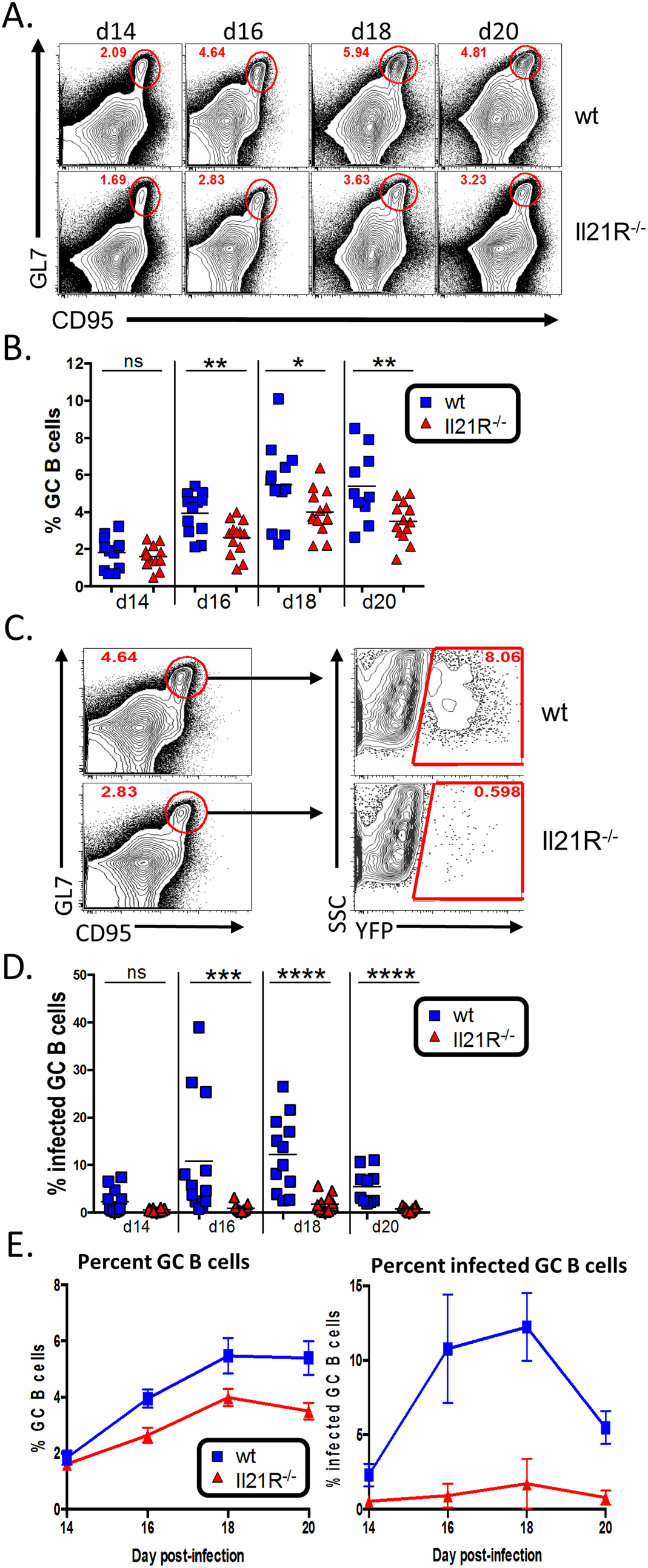 Reduced germinal center response in IL-21R<sup>-/-</sup> mice.