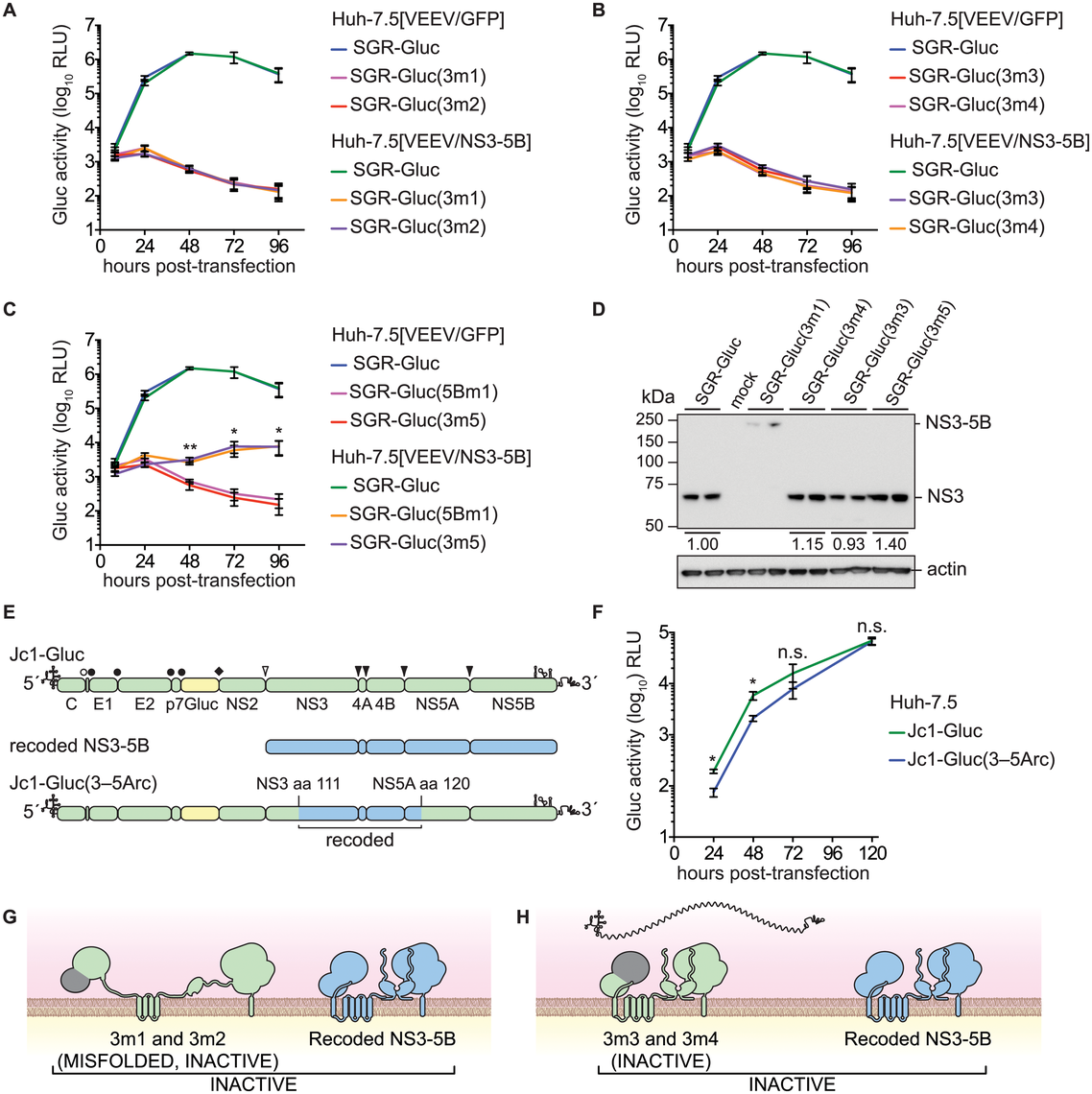 Complementation of NS3 serine protease and RNA helicase active site mutants.