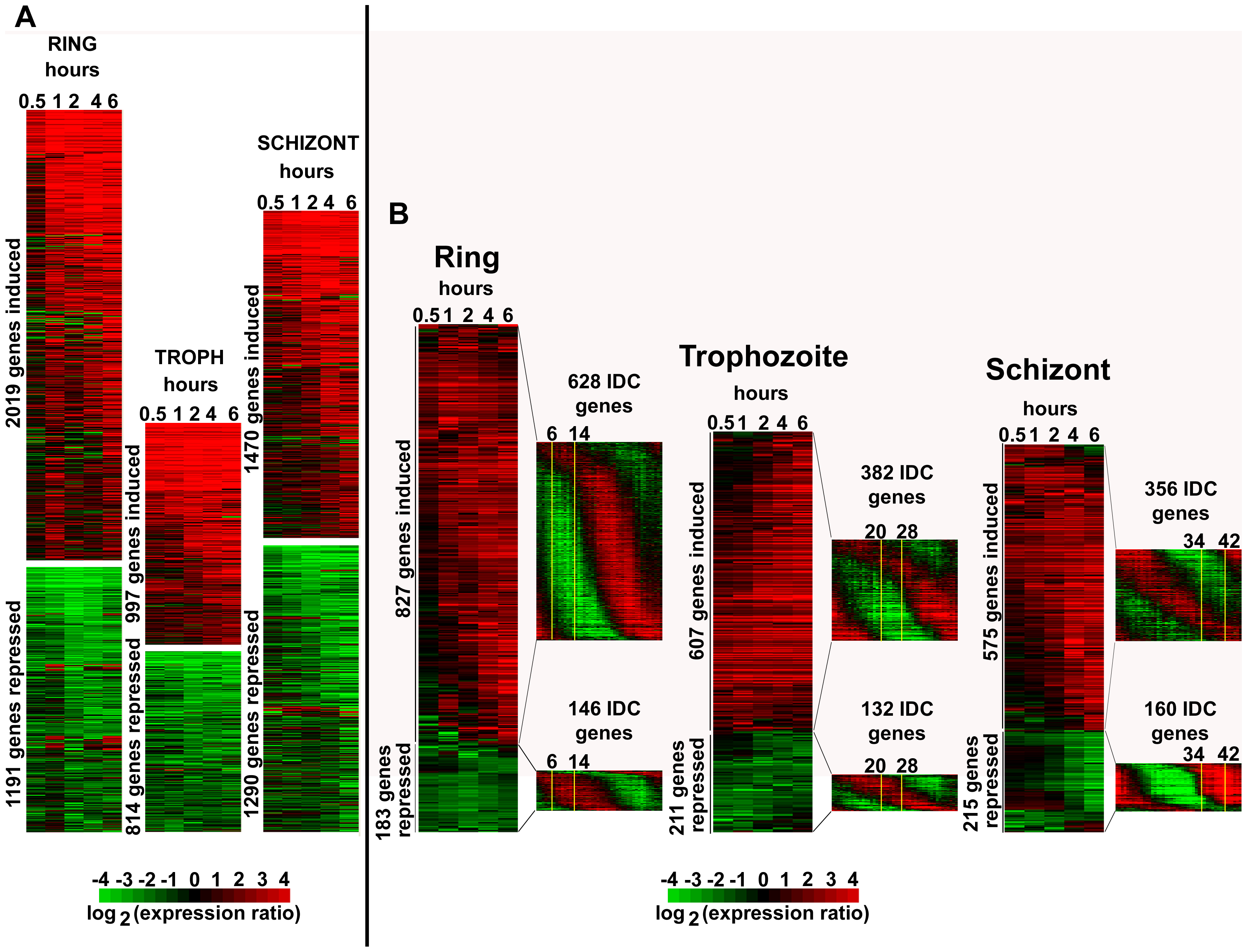 Global transcriptional response of <i>P. falciparum</i> to apicidin treatment.