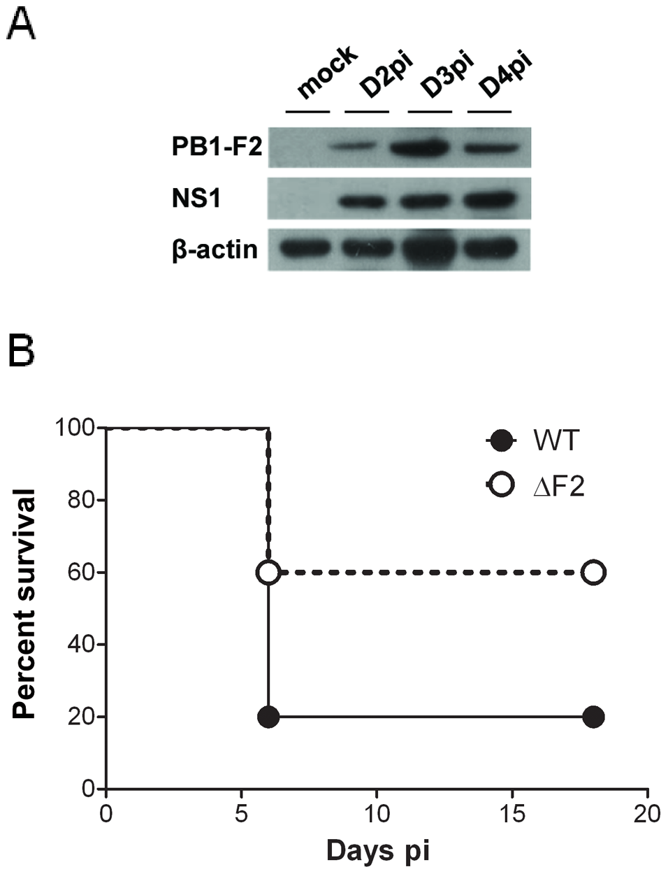 Expression of PB1-F2 and associated pathogenicity in infected mice.