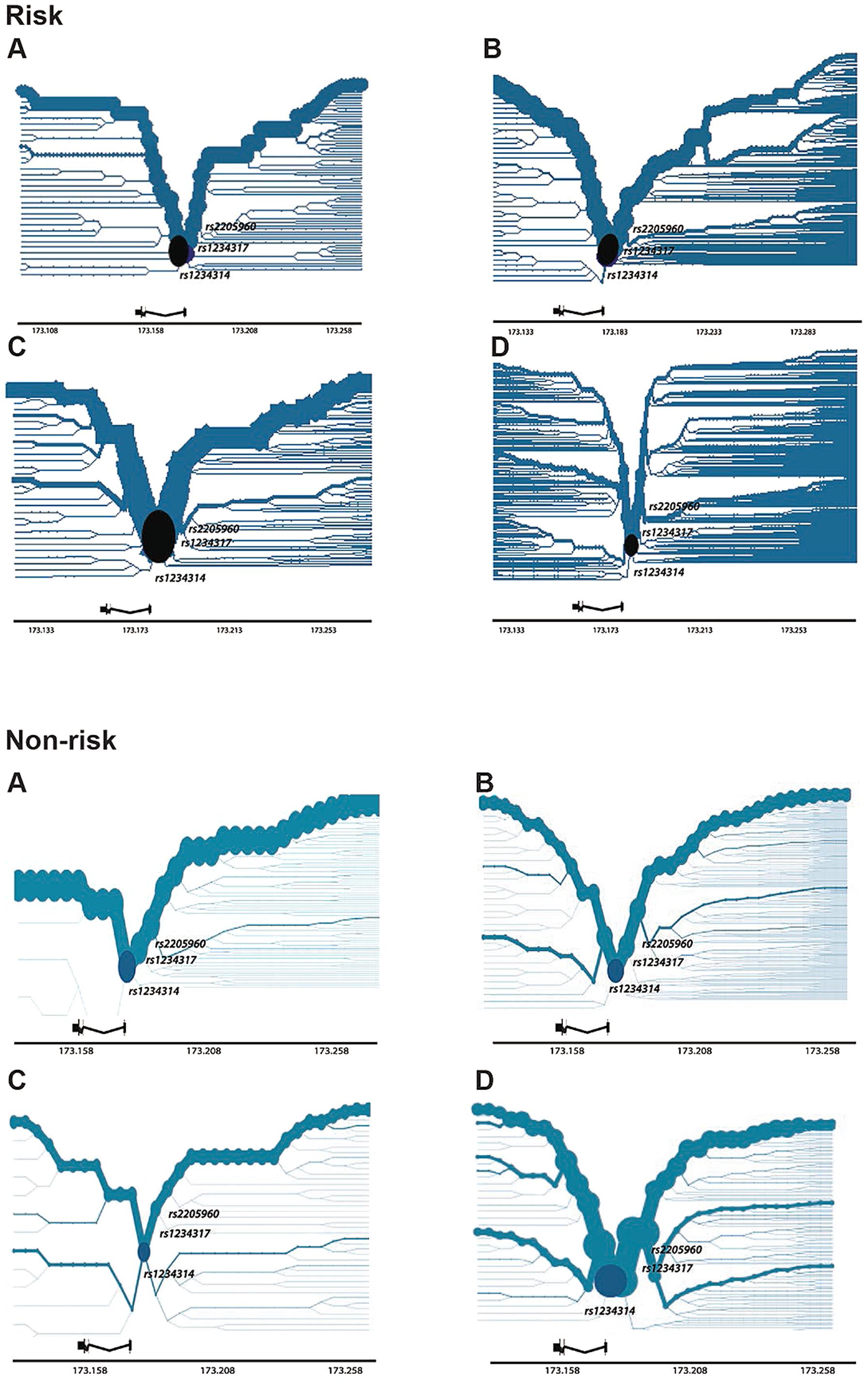 Haplotype Bifurcation Diagrams of <i>TNFSF4<sub>risk</sub></i> and <i>TNFSF4<sub>non-</sub></i><sub><b>risk</b></sub> for Four Populations.