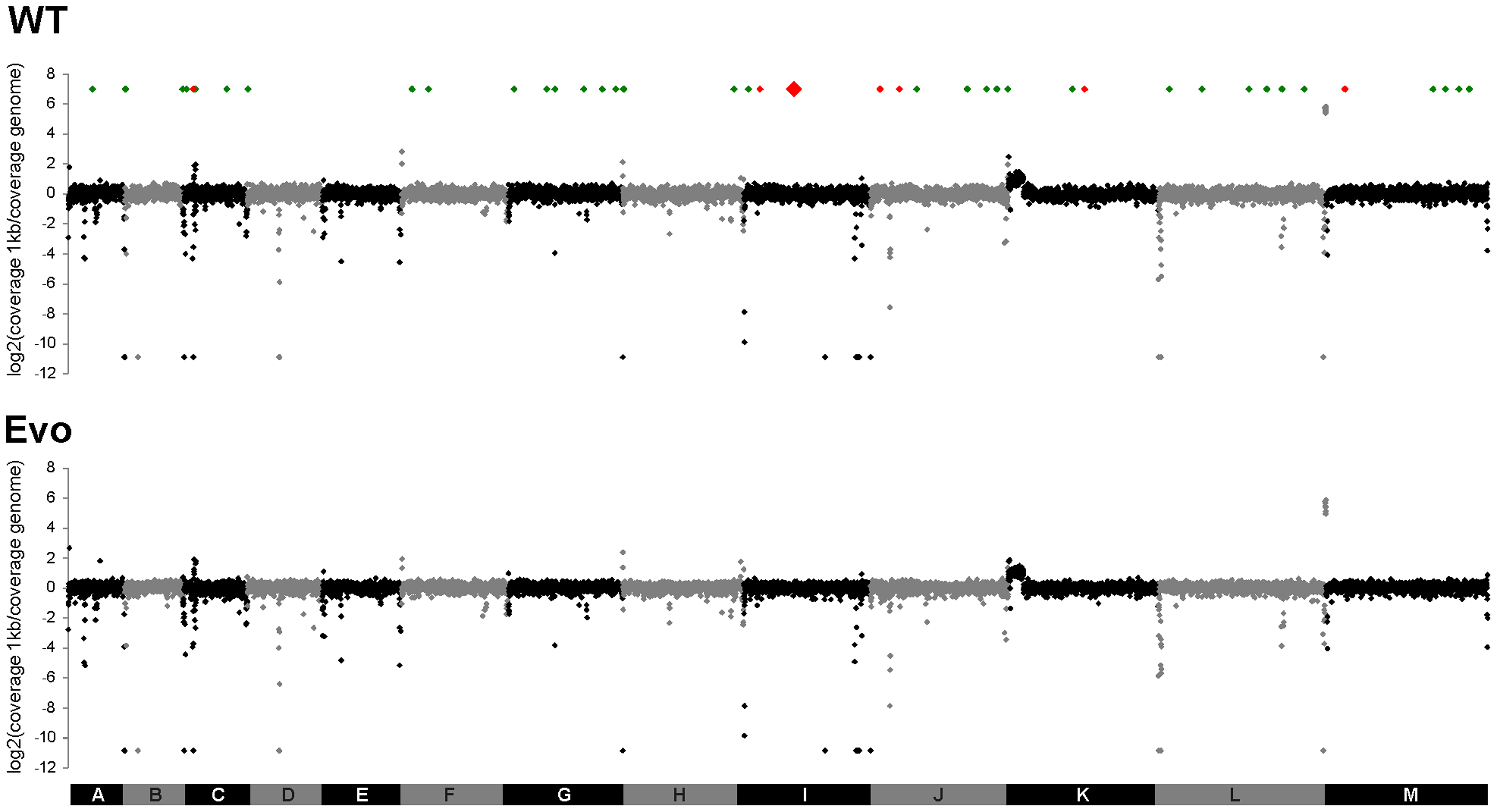 No large-scale genomic changes, but single SNP differences can be detected between WT and Evo strains.