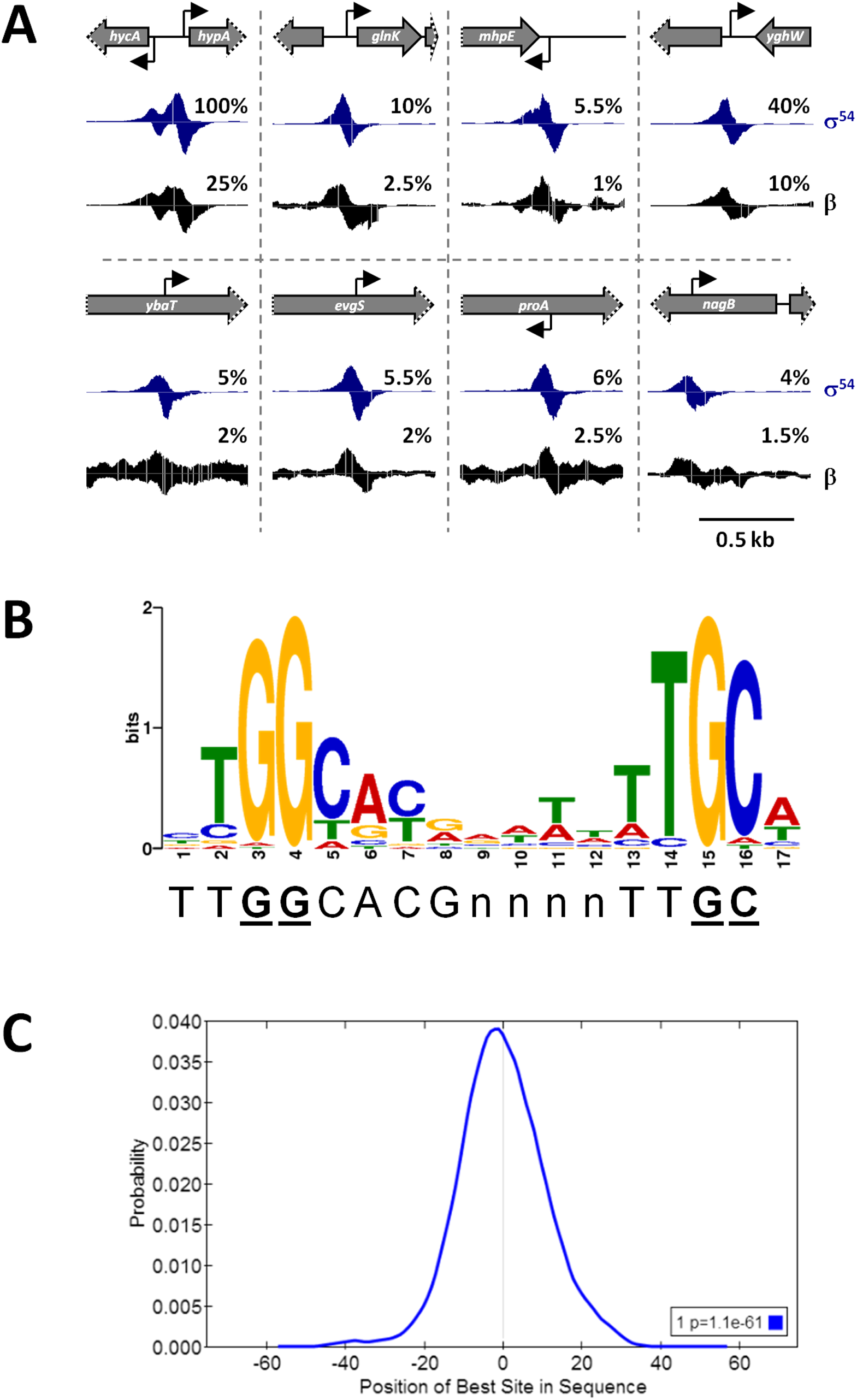 ChIP-seq identifies σ<sup>54</sup> binding sites on a genomic scale.