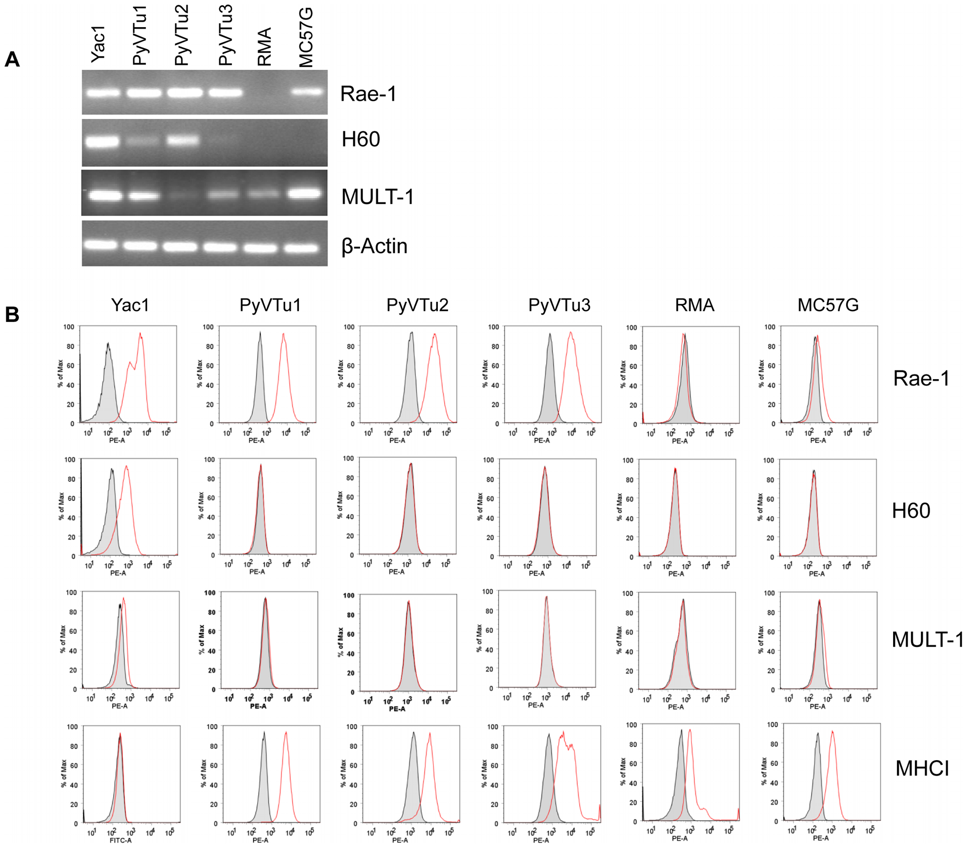 Expression of NKG2D ligands on cell lines established from PyV-induced salivary gland tumors of TCRβ×δ KO mice.