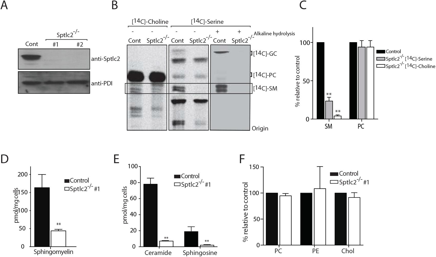 CRISPR/Cas9-mediated deletion of Sptlc2 in DC2.4 cells.