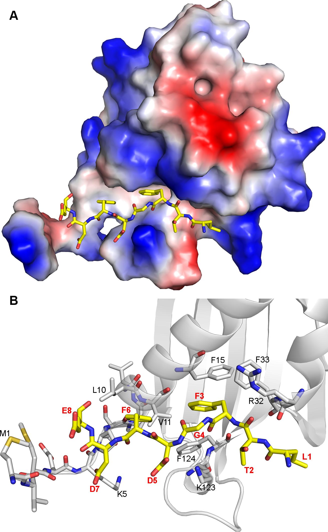 Molecular model of G3BP/FGDF interaction.