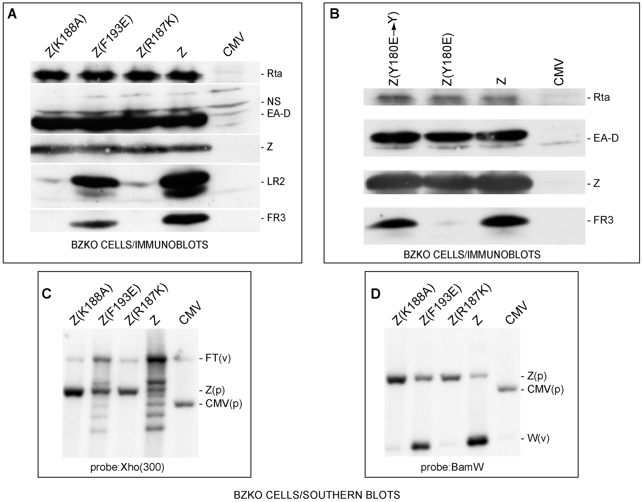 ZEBRA mutants defective in lytic replication and late gene expression.