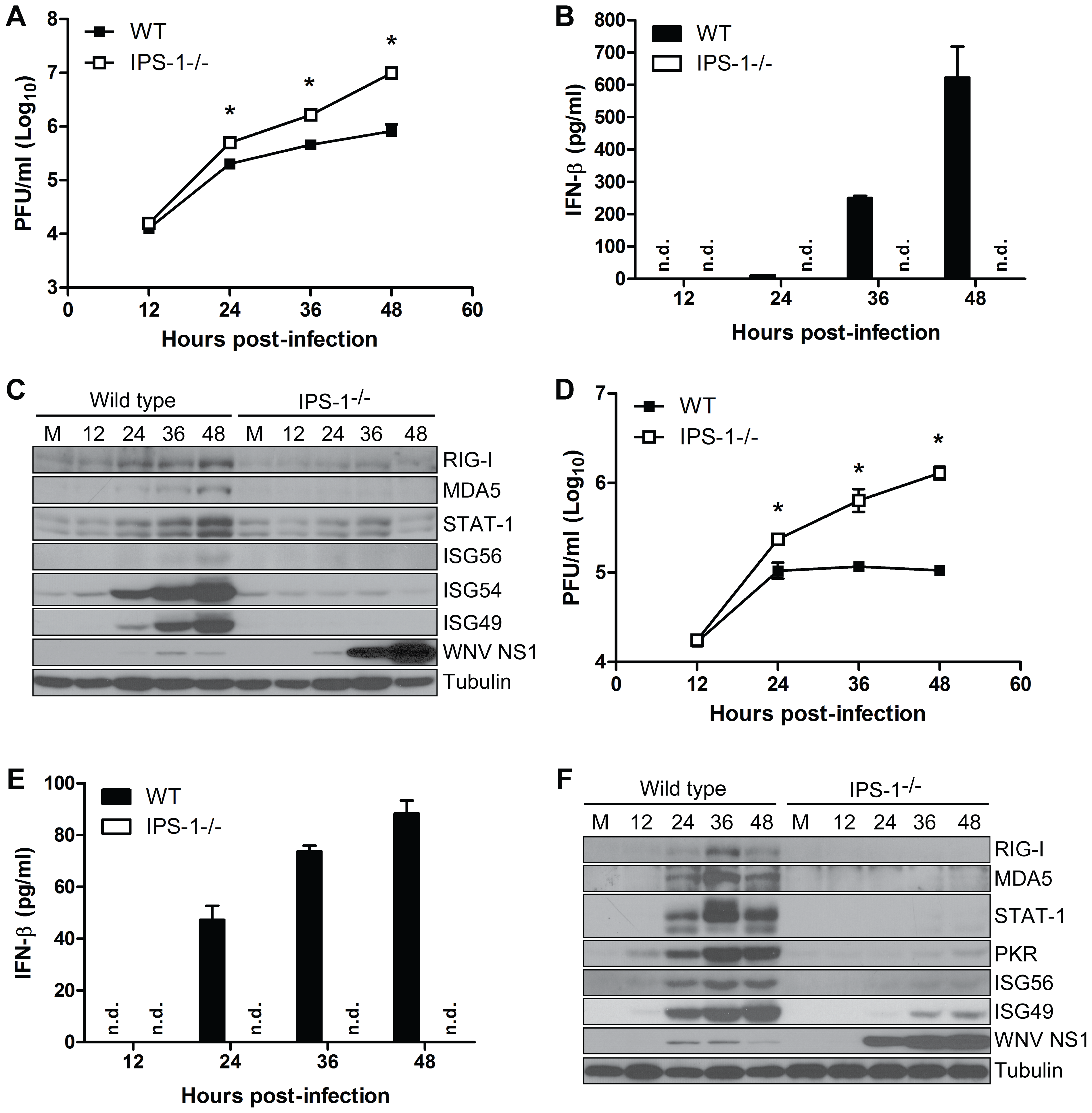 IPS-1 is essential for triggering the innate immune response to WNV infection and controlling virus replication in myeloid cells.