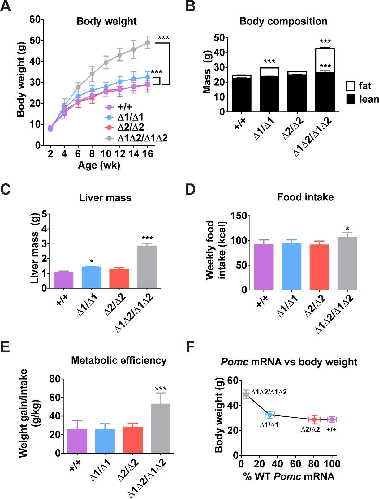 Metabolic phenotype of male nPE mutant mice.