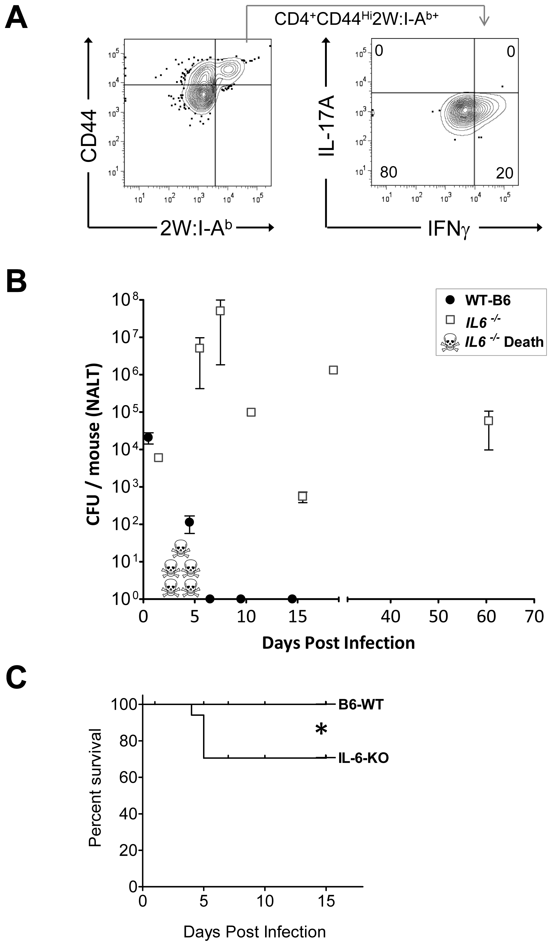 Mice deficient in Th17 cells fail to clear primary GAS infections from NALT and become chronic carriers.