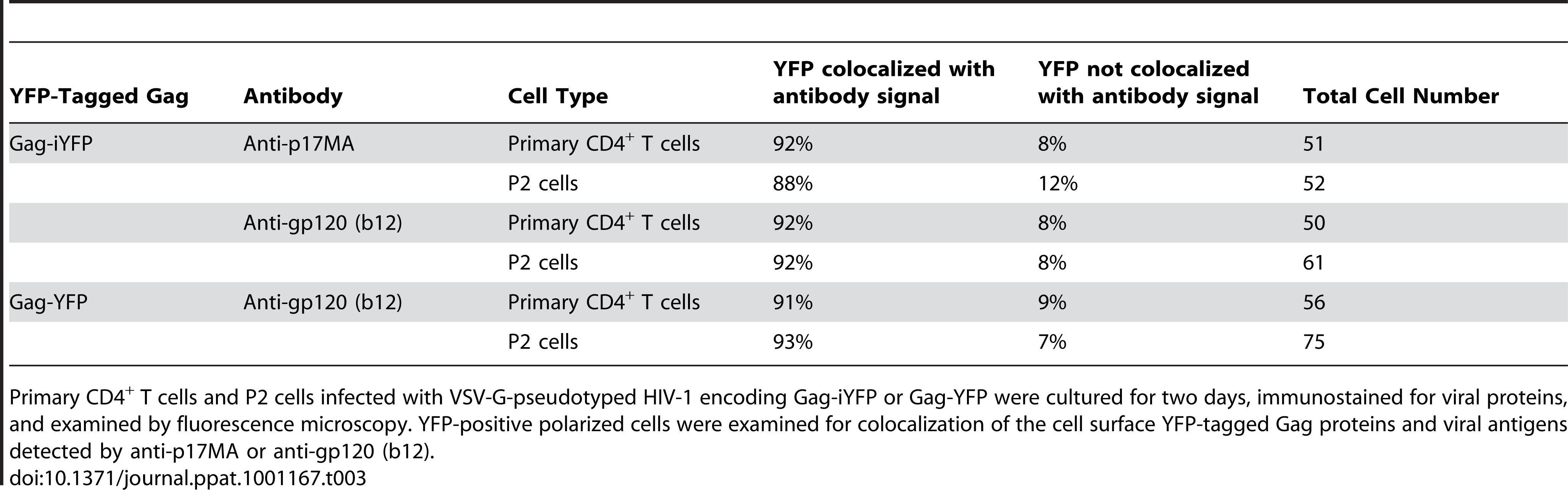 Colocalization of YFP-Tagged Gag with Antibody-Detected Viral Proteins.