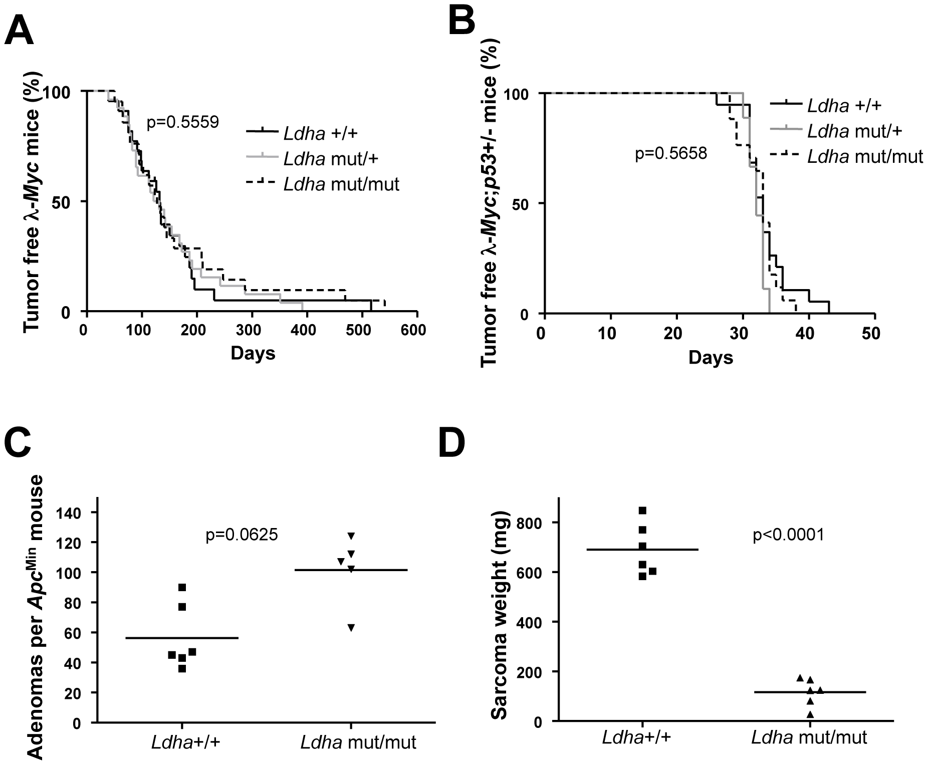 <i>Ldha</i> is dispensable for Myc-induced lymphomagenesis but not for the development of Ras-induced fibrosarcomas.