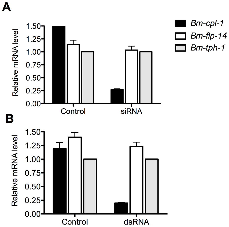 Quantitative PCR demonstrates significant reduction in <i>Bm-cpl-1</i> transcript levels as a result of siRNA and dsRNA RNAi trigger injection into <i>B. malayi</i>-infected <i>Ae. aegypti</i>.