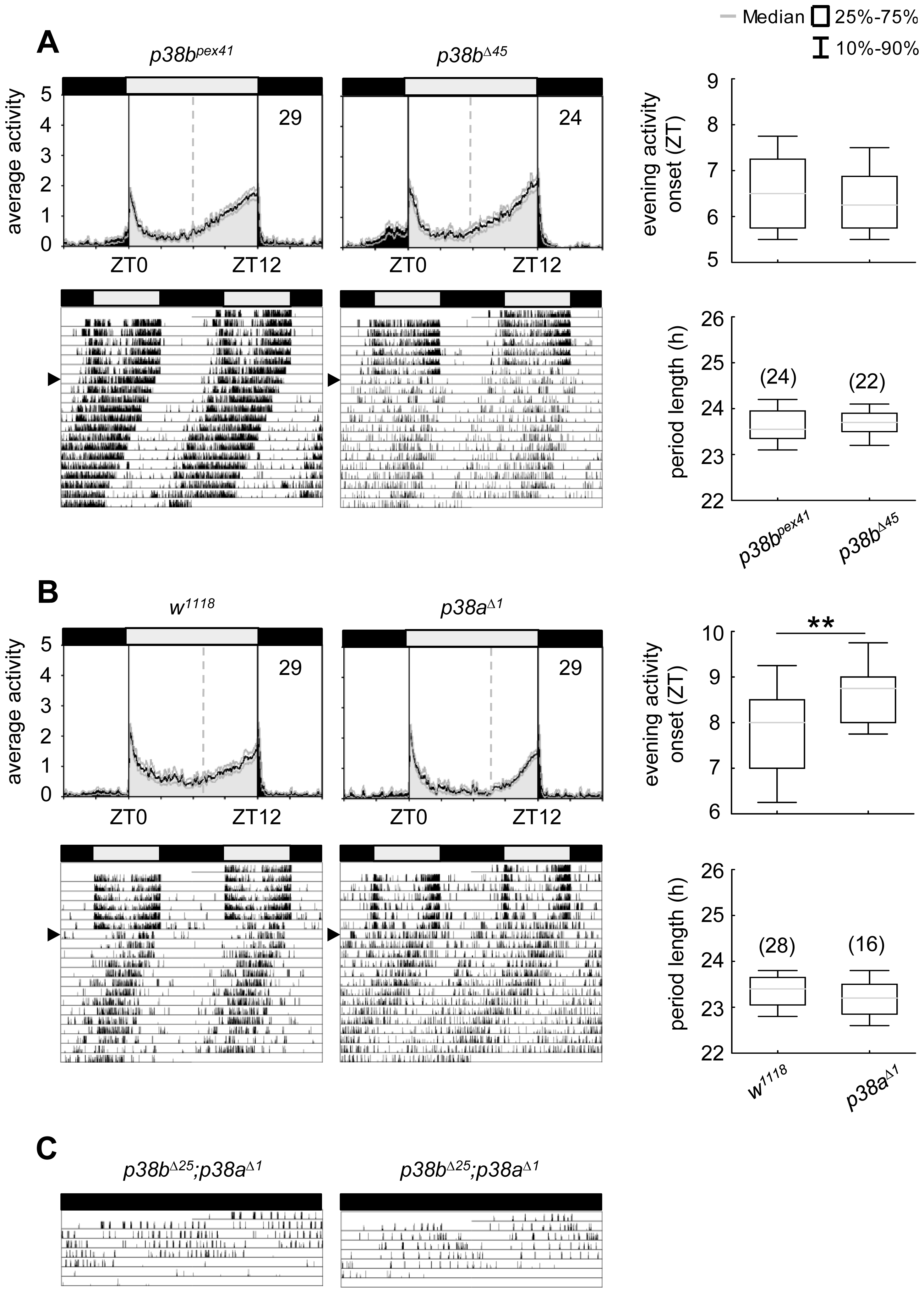 Locomotor activity rhythms of <i>p38b</i> and <i>p38a</i> null mutants and hypomorphic double mutant flies.