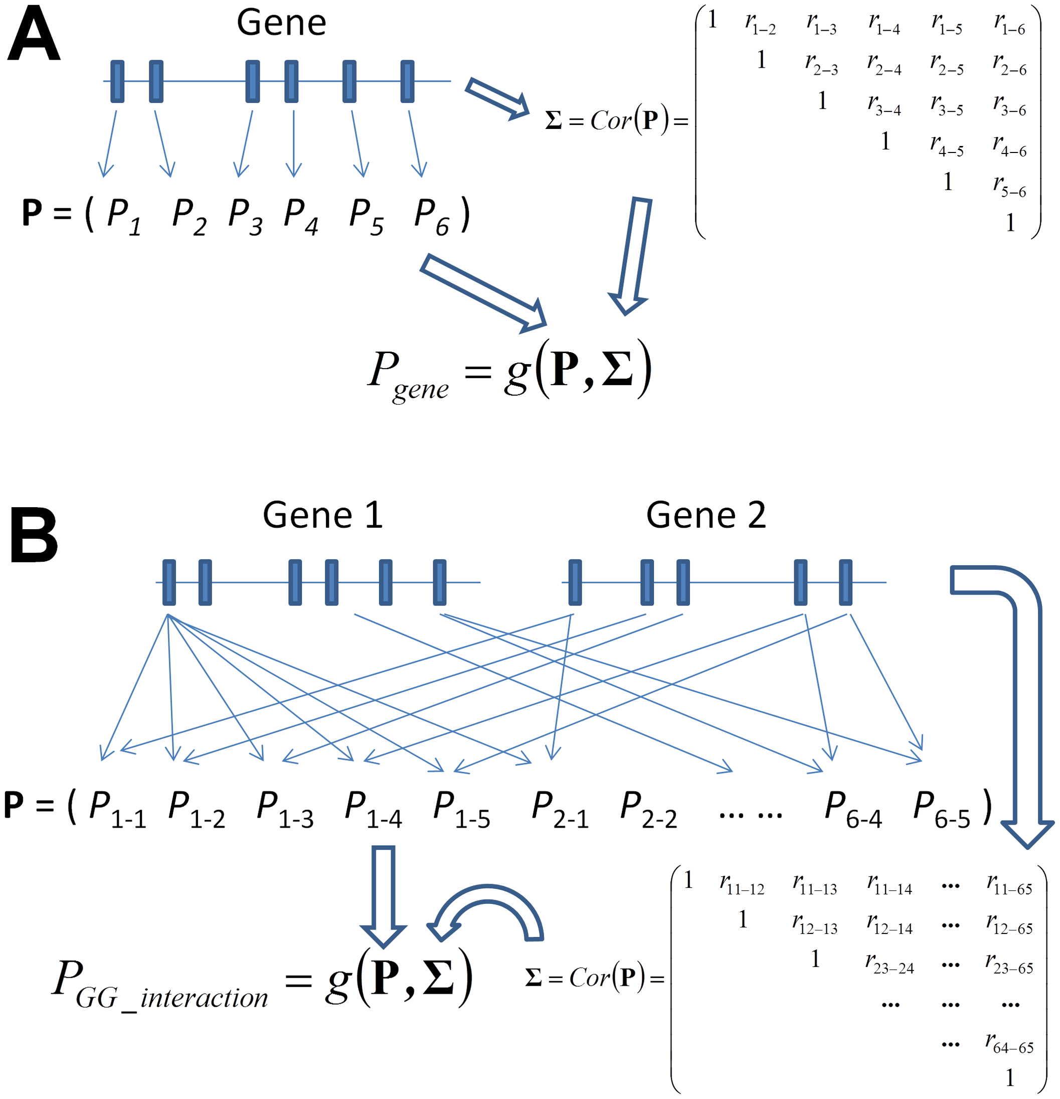 Graphical illustration of the framework of gene-based single-marker test and its generalization to a gene-based gene–gene interaction (GGG) test as proposed in this paper.