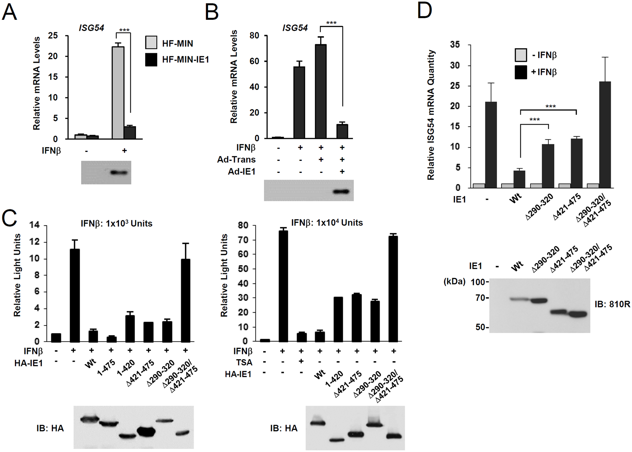 Effects of ectopic IE1 expression on the IFNβ-mediated ISG54 induction.