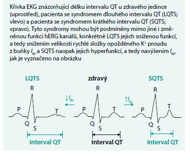 Význam hERG kanálů v srdeční tkáni