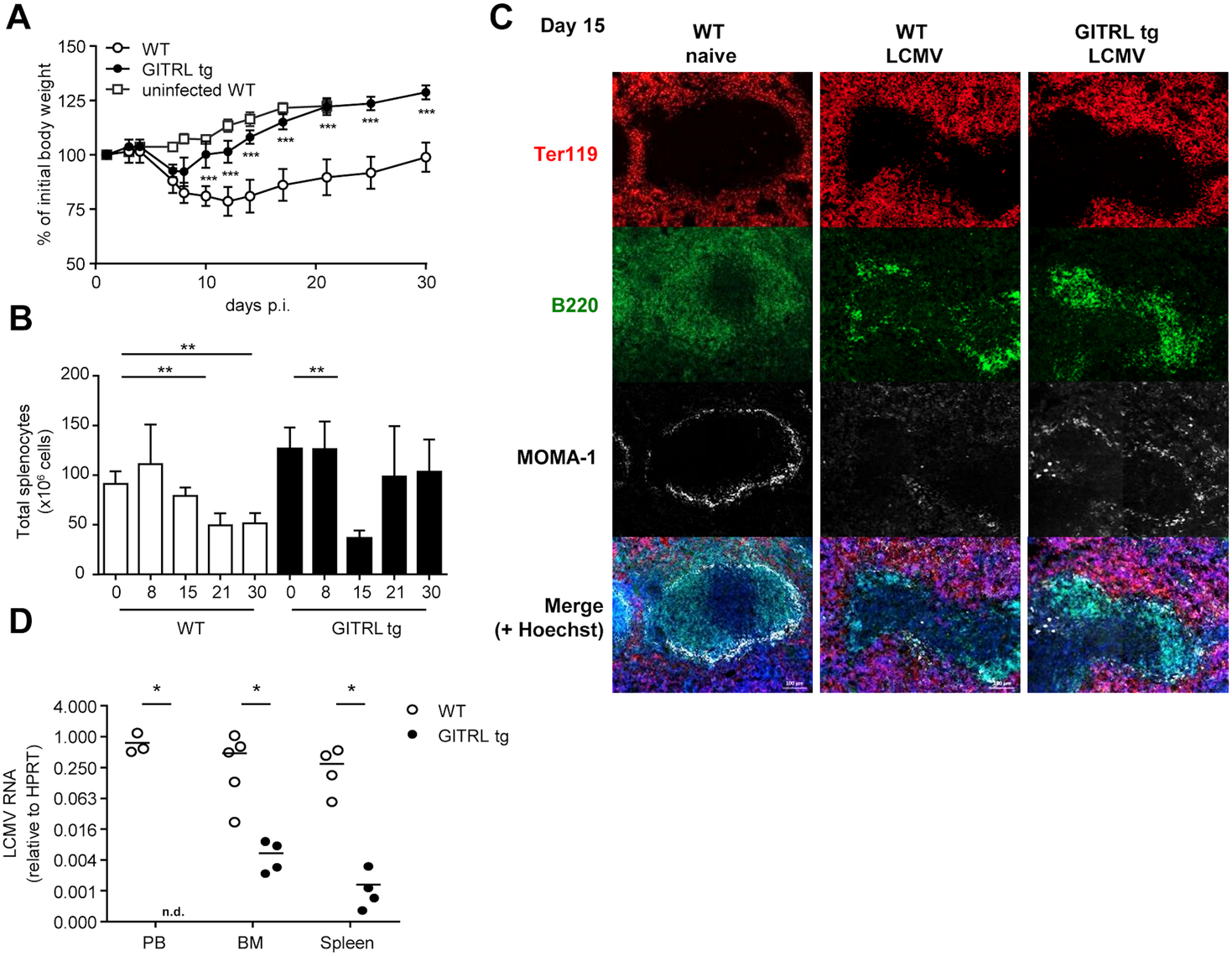 GITRL tg mice are protected against chronic LCMV infection.