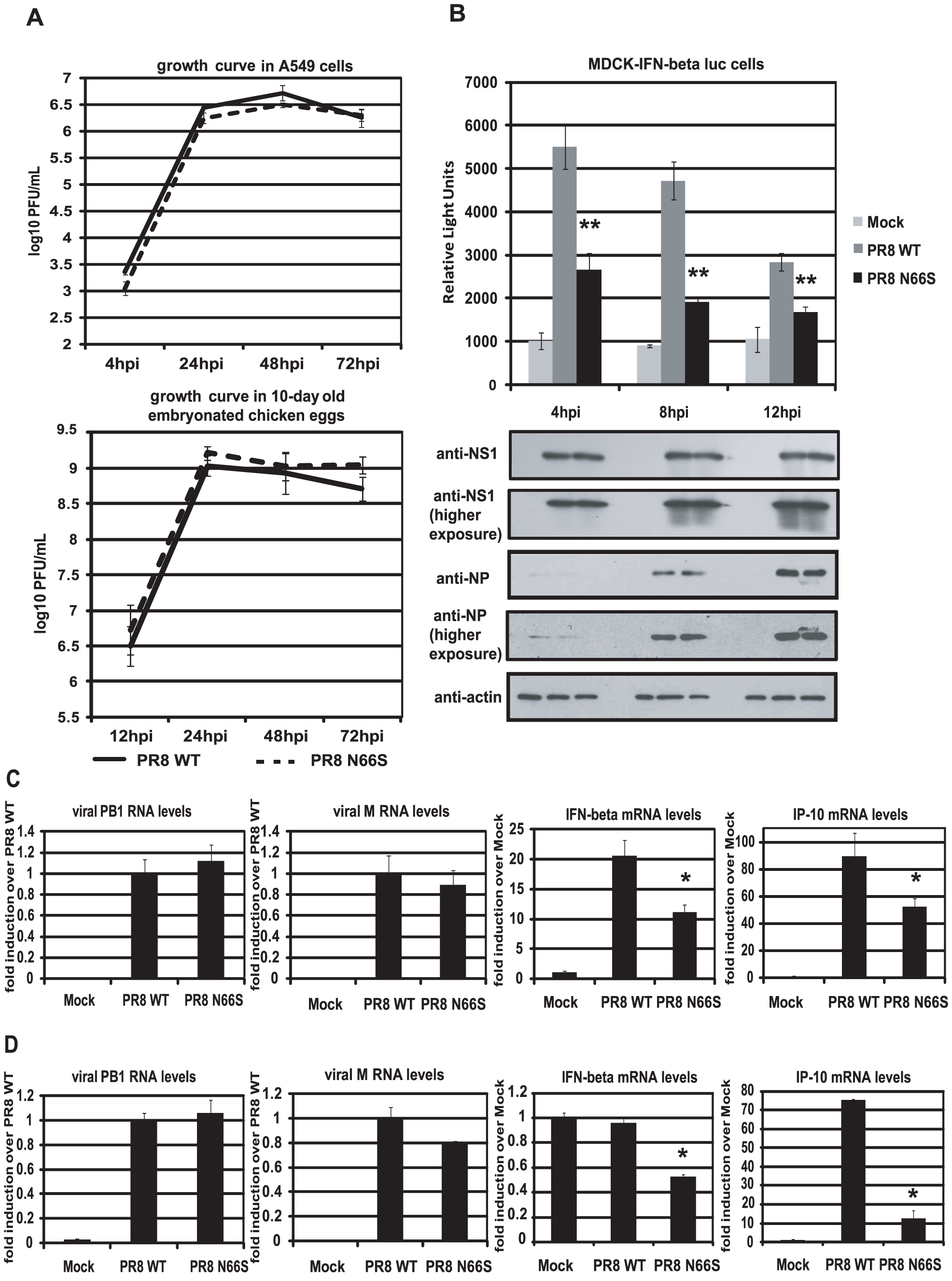 PB1-F2 N66S induces less IFN compared to PB1-F2 WT in the context of viral infection.