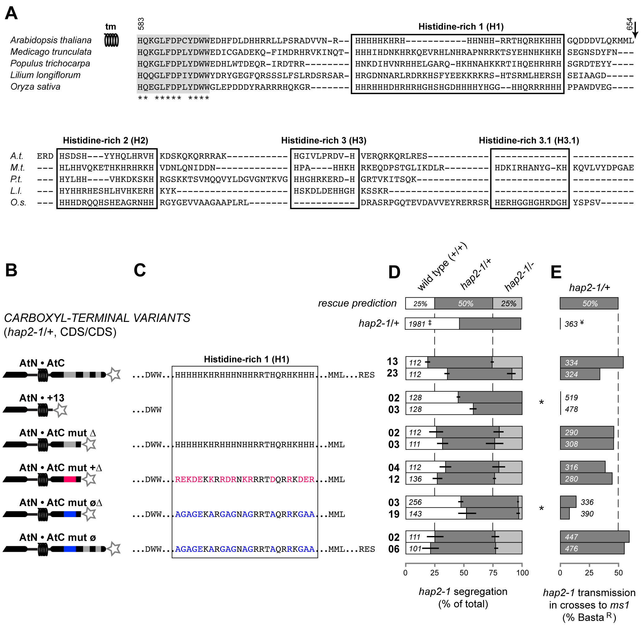 Positive charge in the C-terminal region is required for HAP2(GCS1) function.