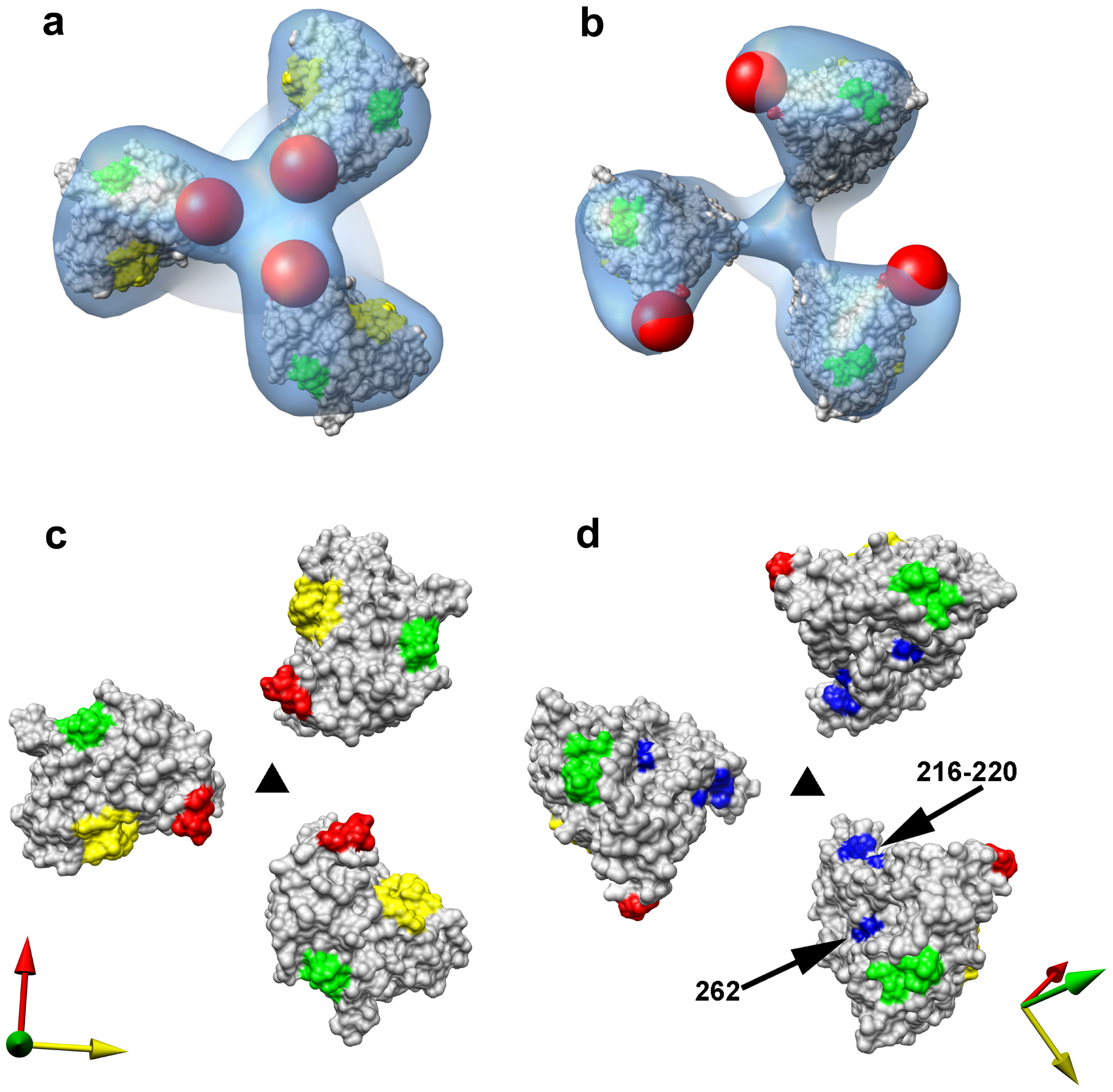 Closed and open states of trimeric SIV Env.