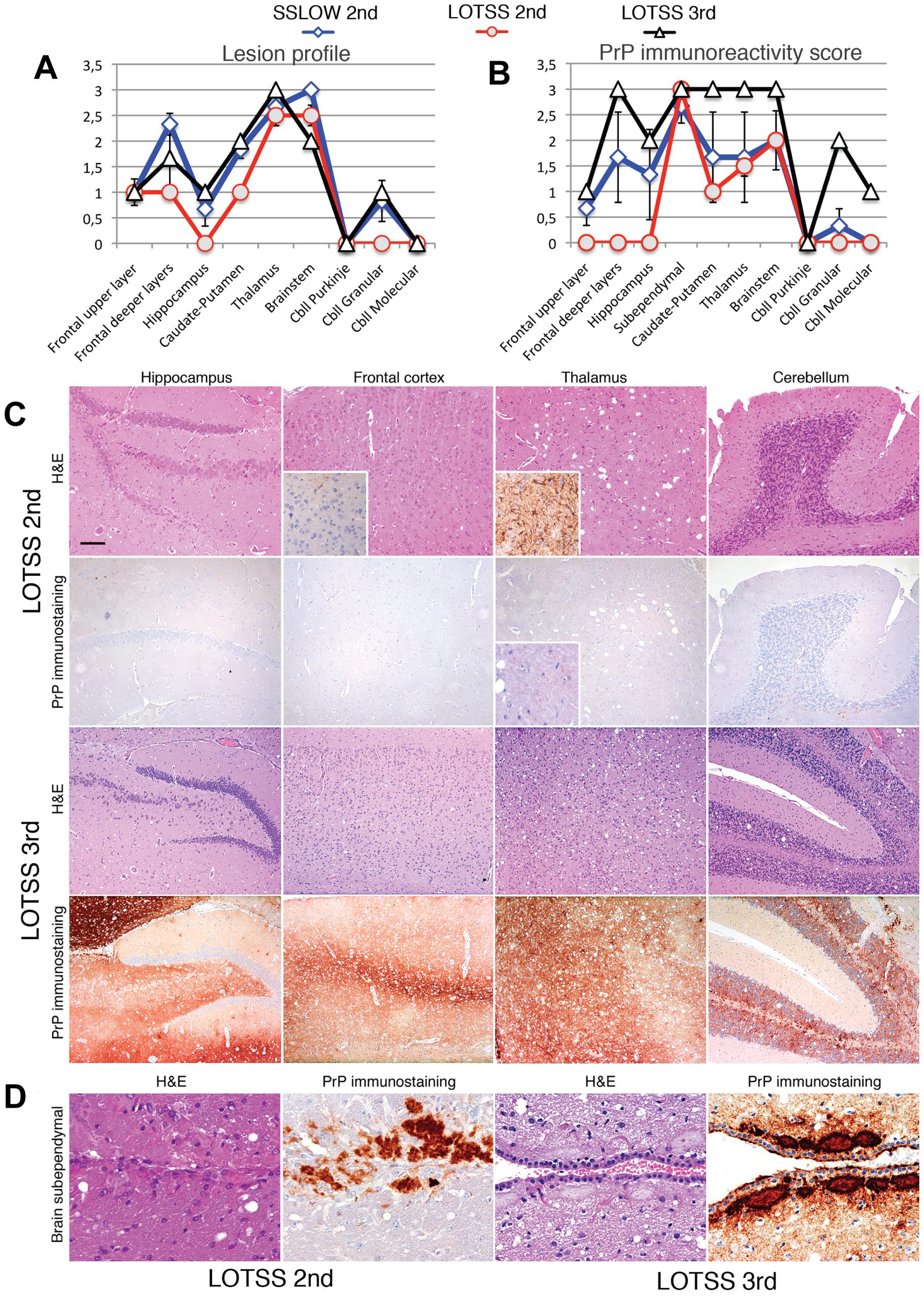 Histopathological analysis of brains of LOTSS-inoculated animals.