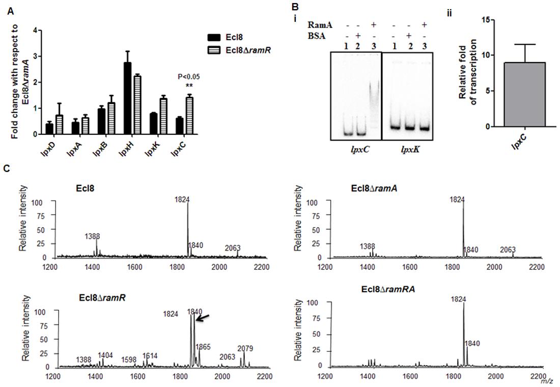 A. Gene Expression analyses of <i>lpx</i> genes.