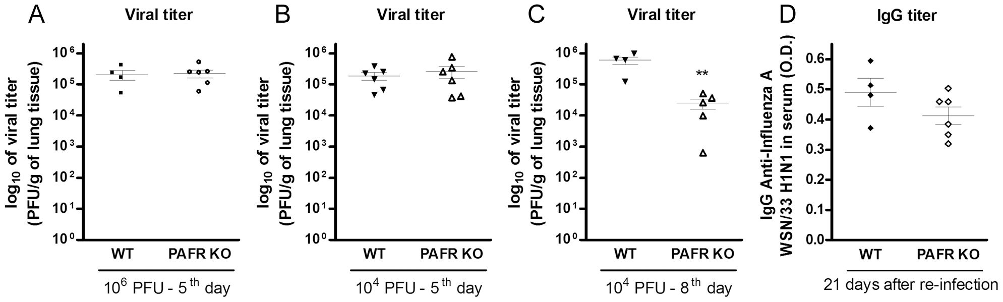 Viral load and specific antibodies after Influenza A/WSN/33 H1N1 infections of WT and PAFR-deficient mice.