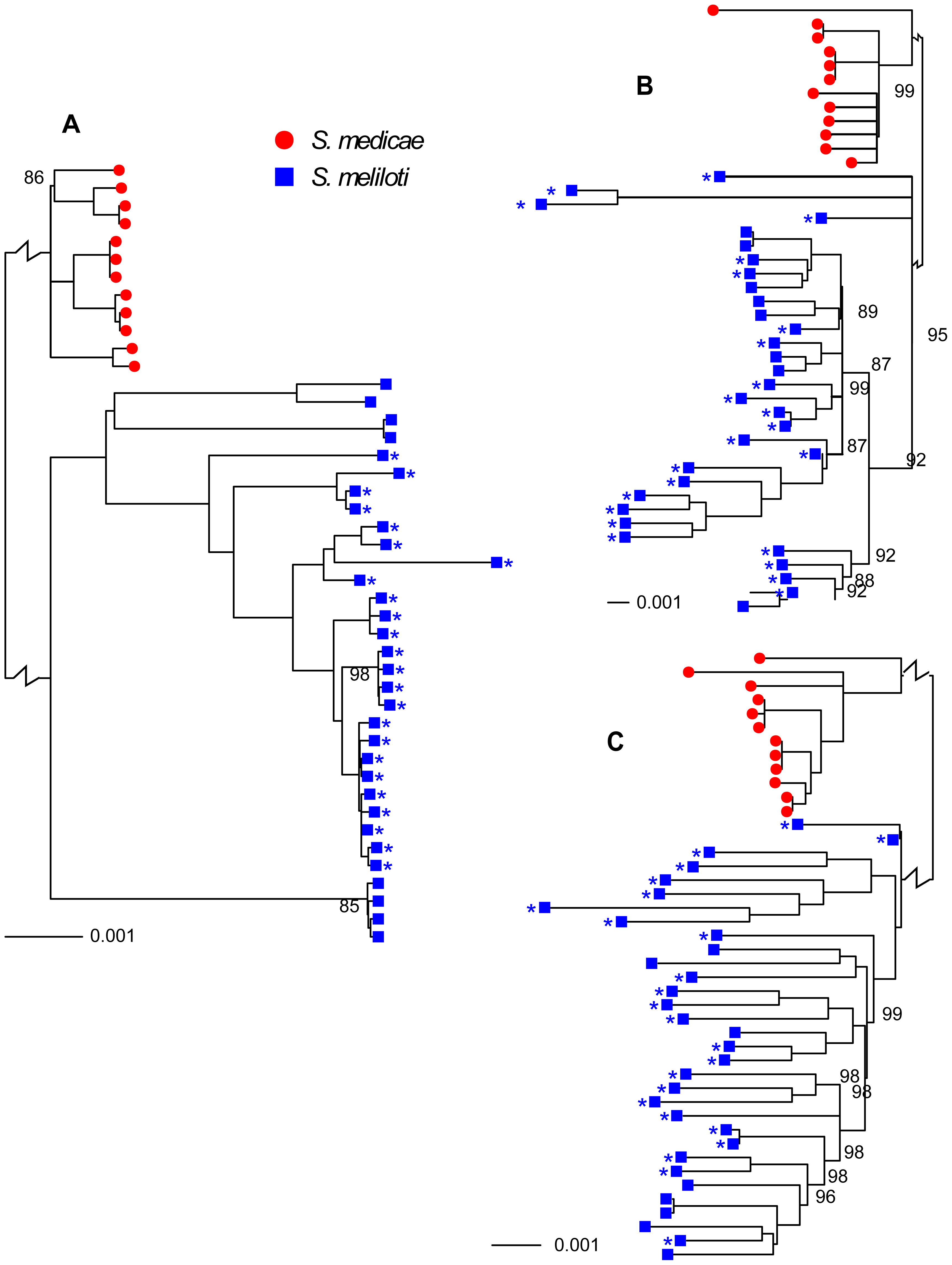 Neighbor-joining trees showing relationships among 32 <i>S. meliloti</i> (blue squares) and 12 <i>S. medicae</i> (red circles).