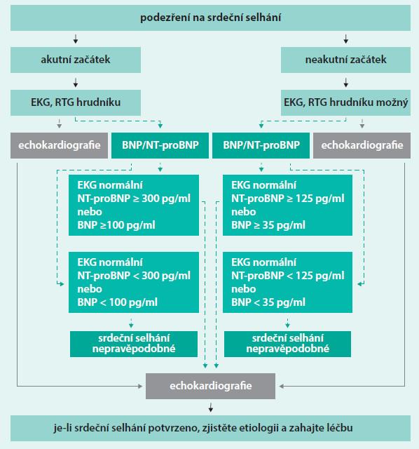 Schéma. Diagnostický algoritmus pro nemocné s podezřením na srdeční selhání dle doporučení ESC. Upraveno podle [74].