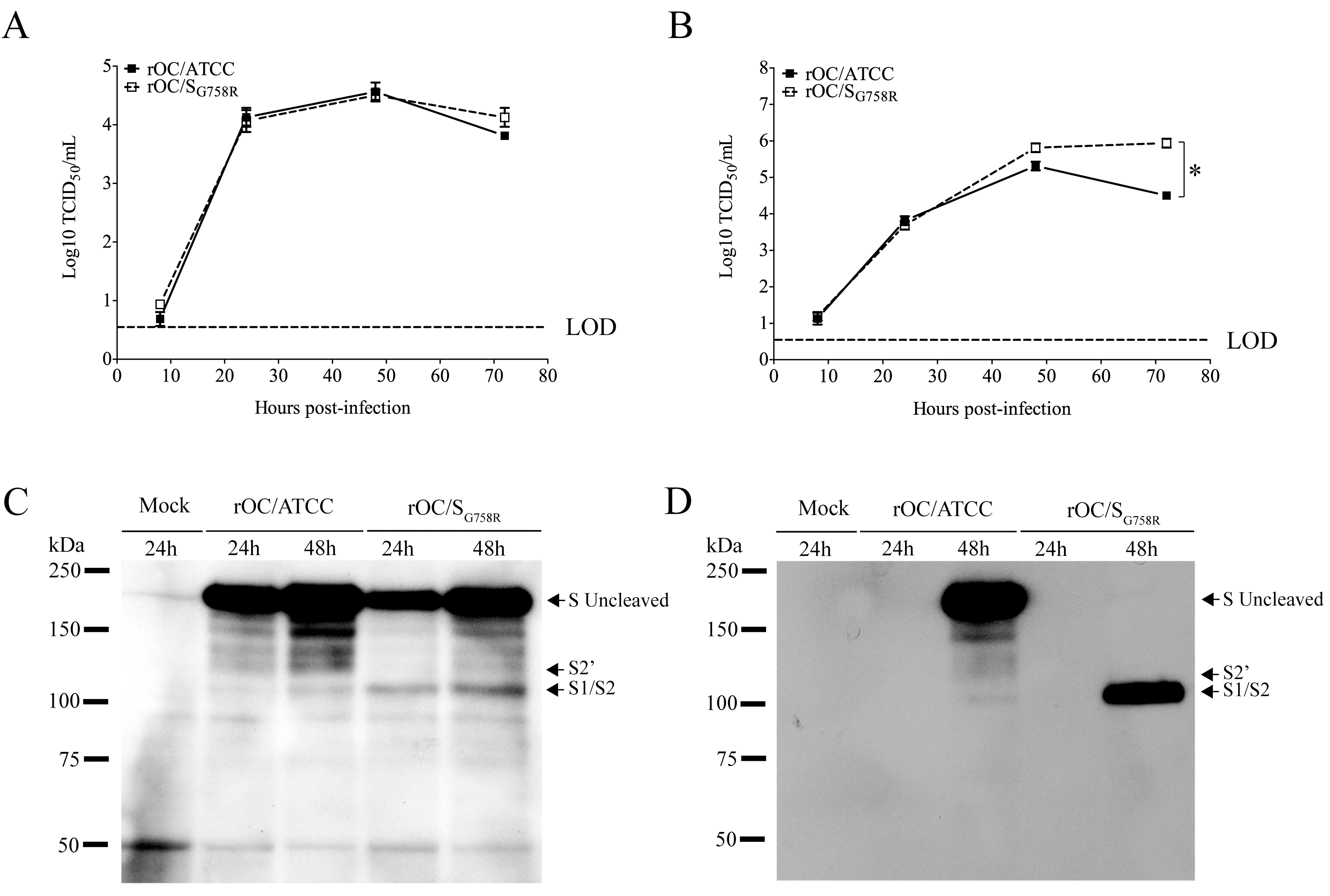 The S glycoprotein harboring a predominant point mutation found in clinical isolates was cleaved more efficiently in supernatant of CNS cells.