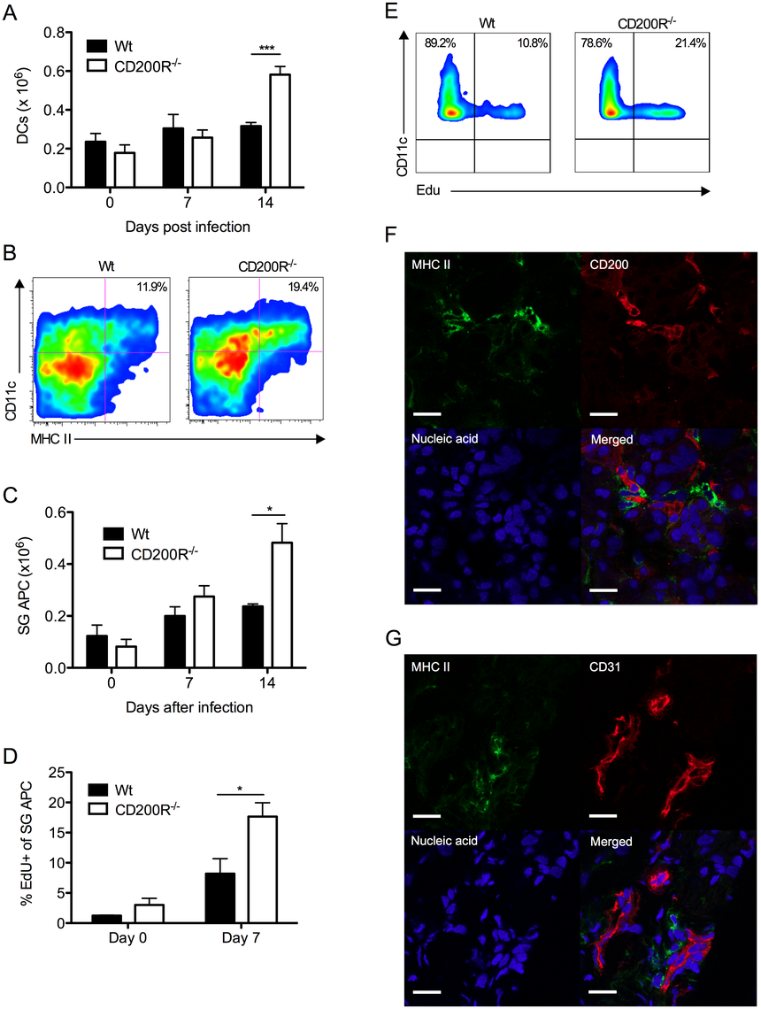 CD200R restricts myeloid cell accumulation and SG-APC proliferation.
