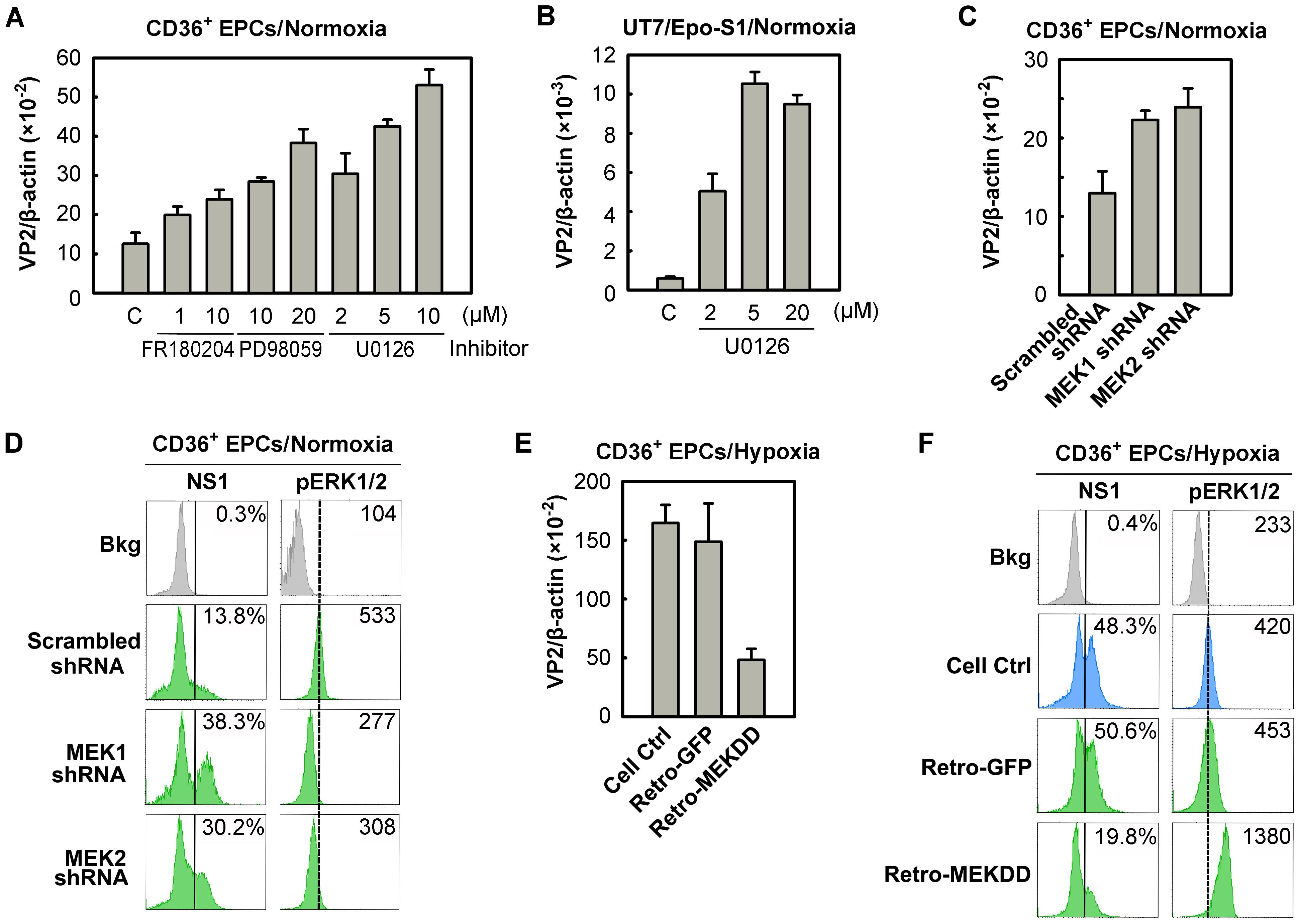 Regulation of B19V infection of CD36<sup>+</sup> EPCs by MEK/ERK pathway.