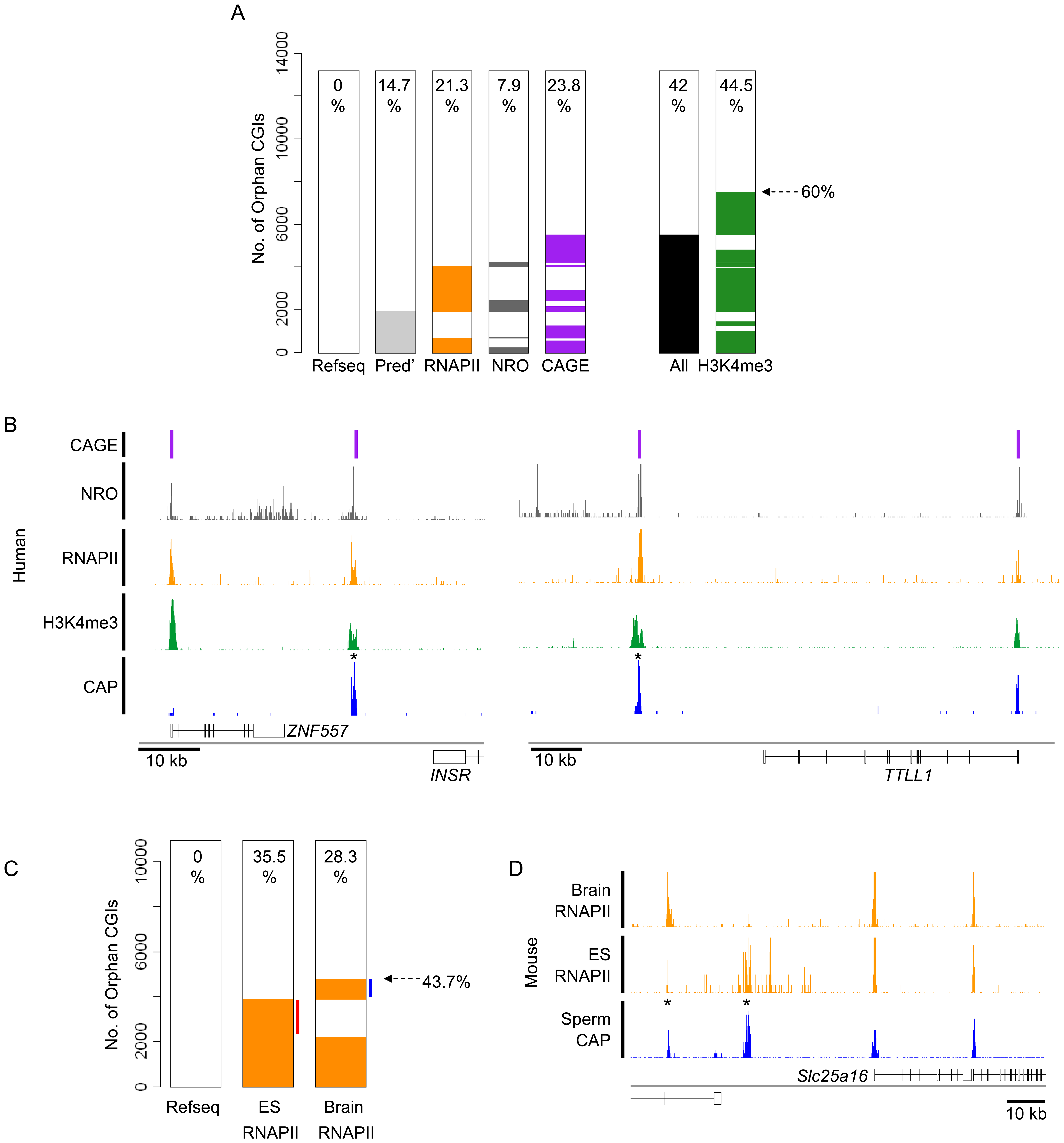 Many orphan CGIs demarcate sites of transcriptional initiation with tissue-restricted activity.