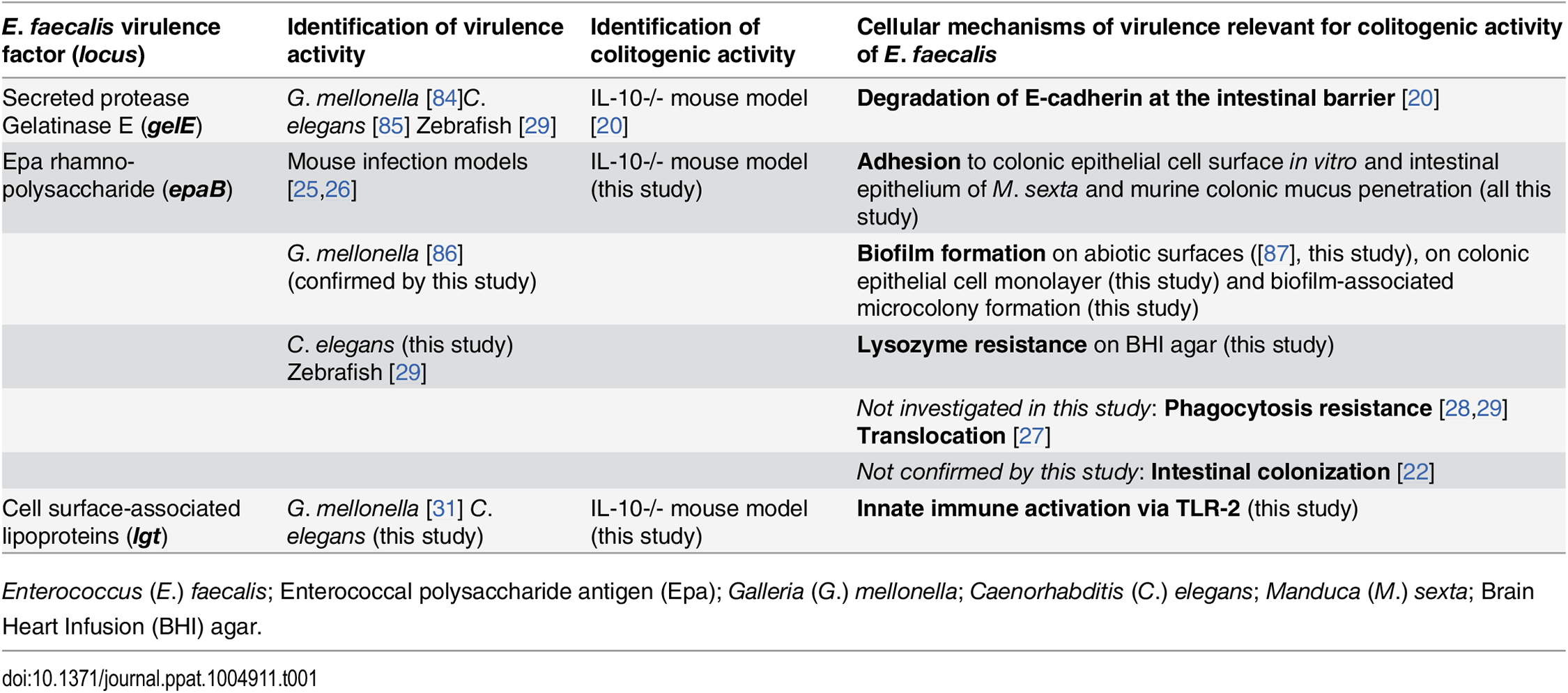 Virulence factors identified to be relevant for colitogenic activity of <i>E</i>. <i>faecalis</i> in the IL-10-/- mouse model and their proposed cellular mechanisms.