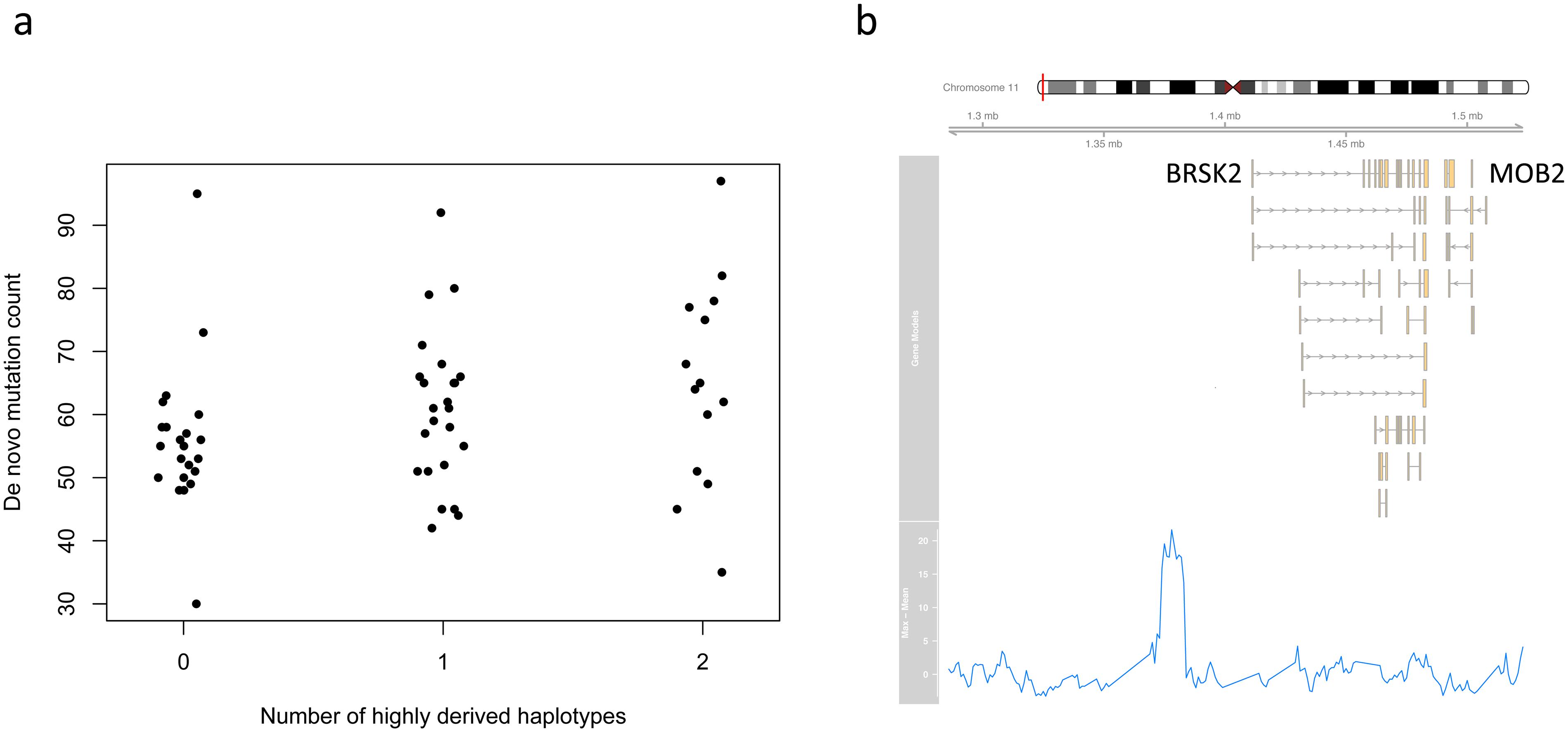 Putative mutator allele on chromosome 11.