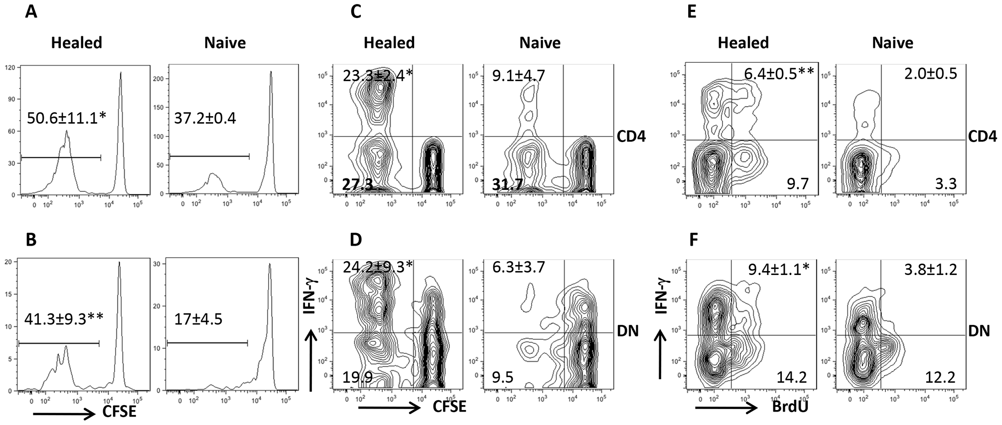 DN T cells proliferate and produce IFN-γ <i>in vivo</i>.