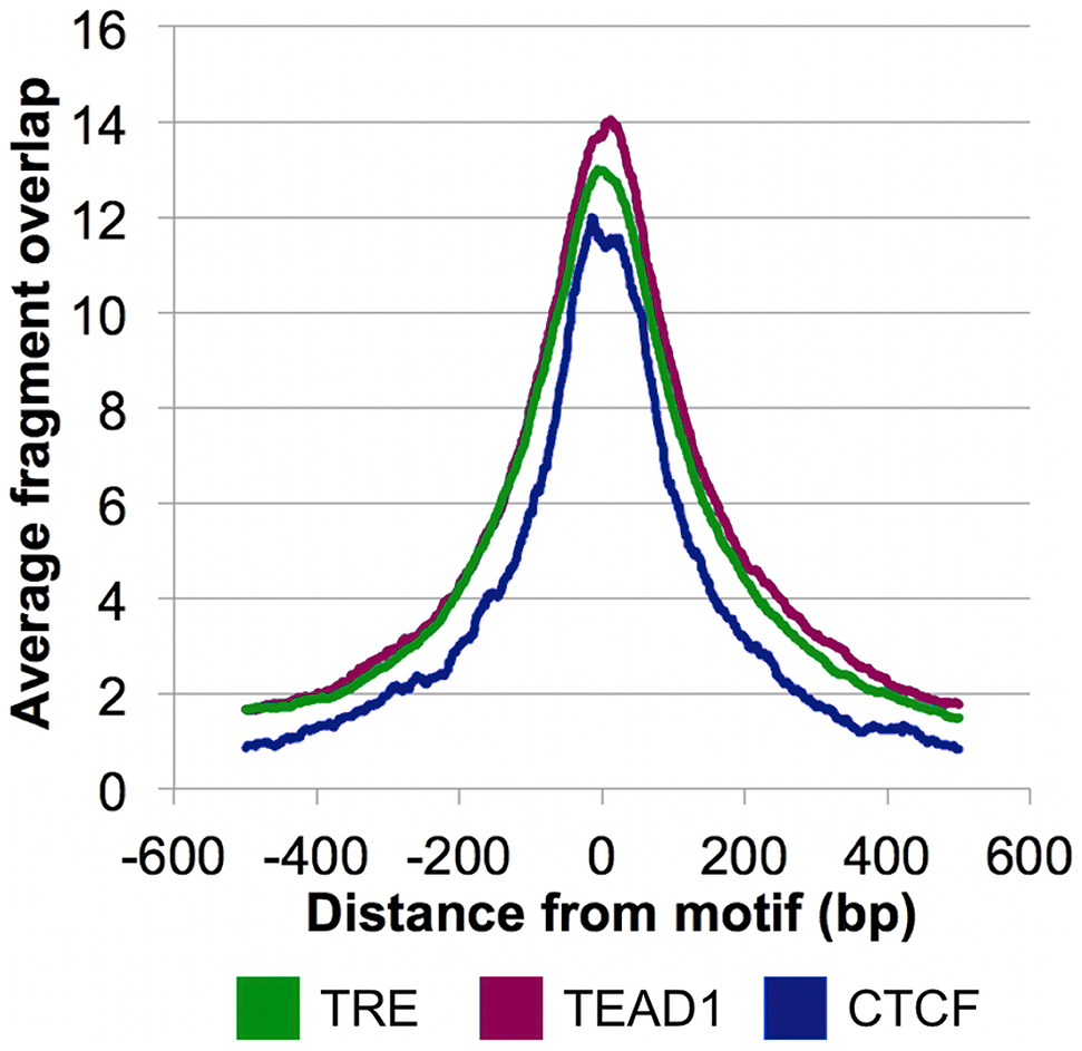 CSB-PGBD3 peak summits coincide with the TRE, TEAD1, and CTCF motifs.